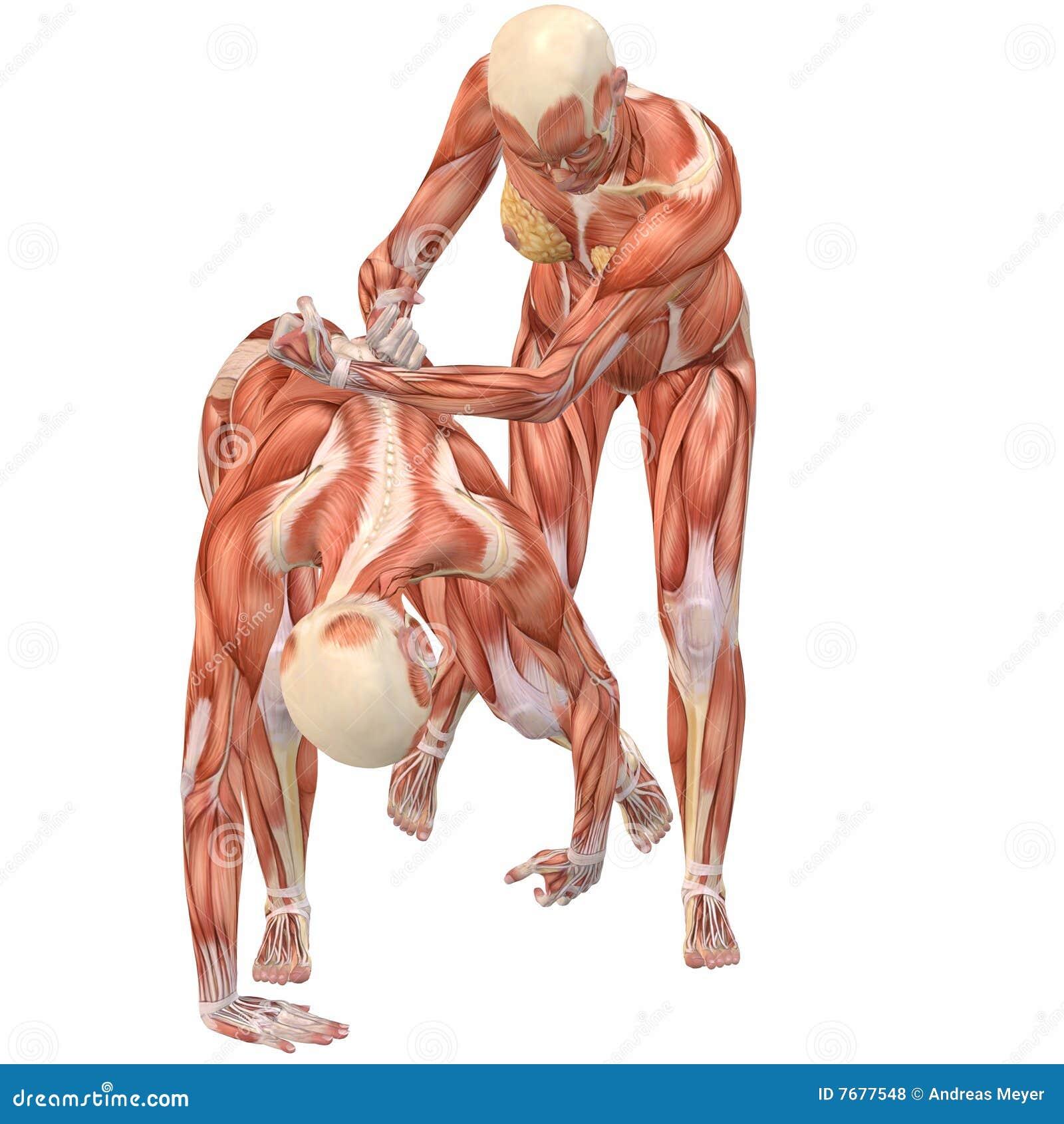 Weiblicher Menschlicher Körper Anatomie-Straße Kampf Stock Abbildung ...