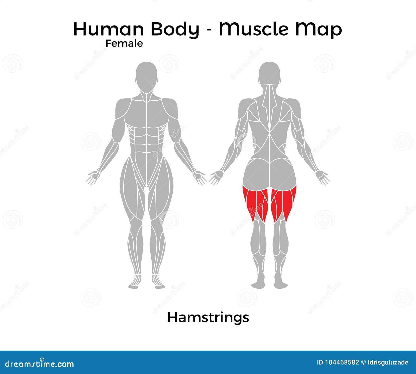 Fein Druckbare Menschlicher Körper Umriss Ideen - Menschliche ...