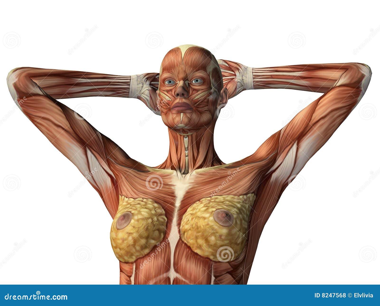 Muskel weibliche Sex Videos