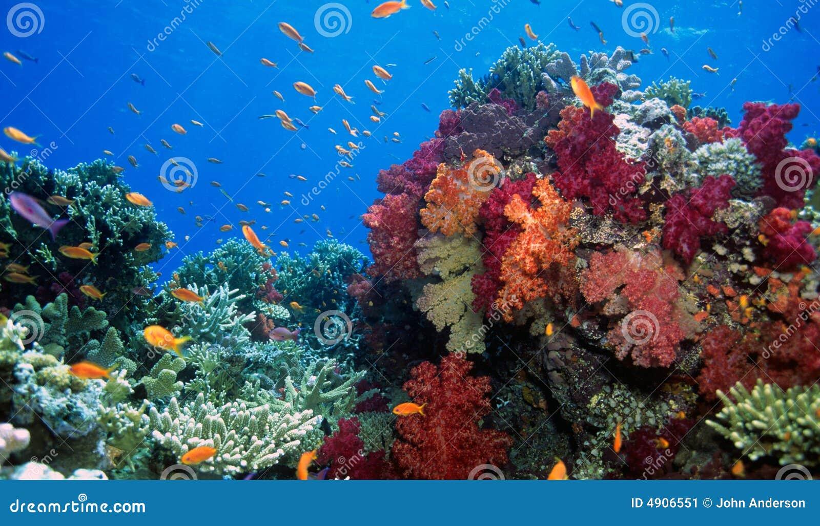 Weiche Korallenriffszene