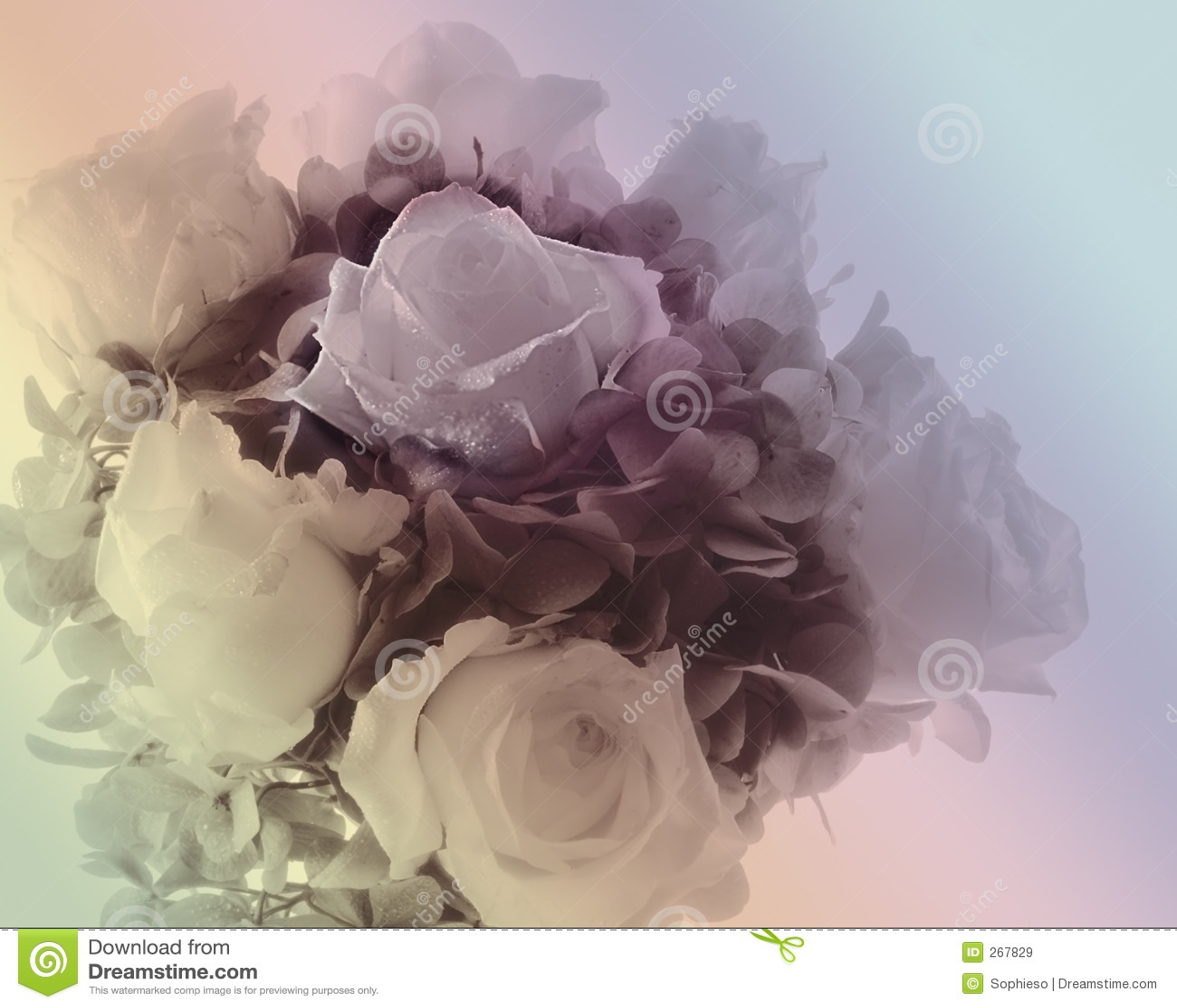 Weicher Blumenstrauß der Rosen