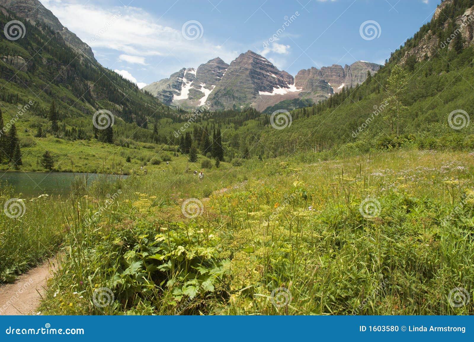 Weide en de Kastanjebruine Klokken