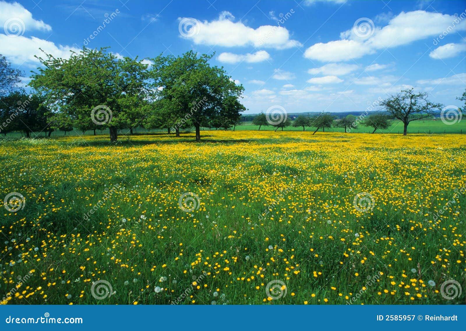 Weide met bloemen 3