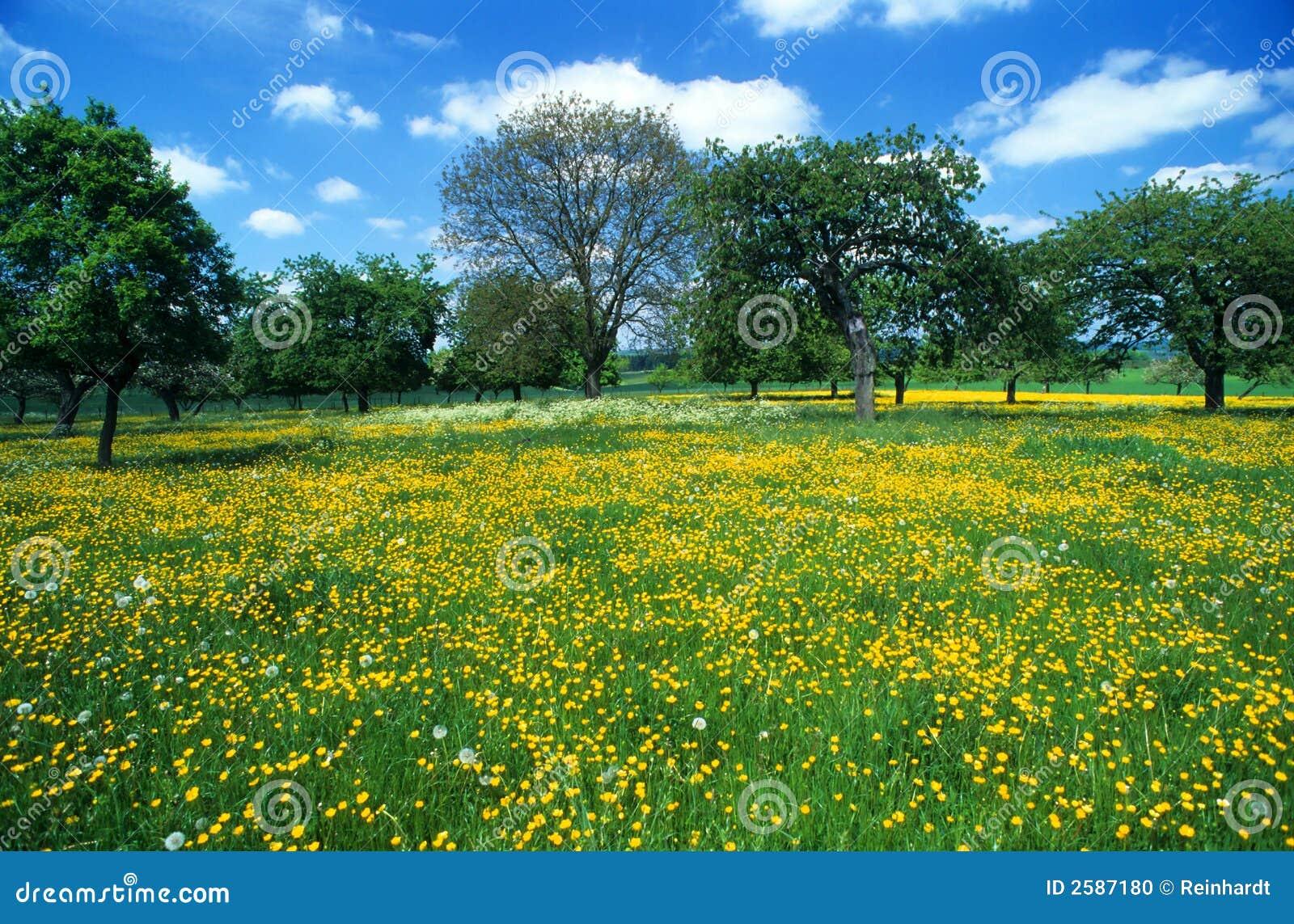Weide met bloemen 6
