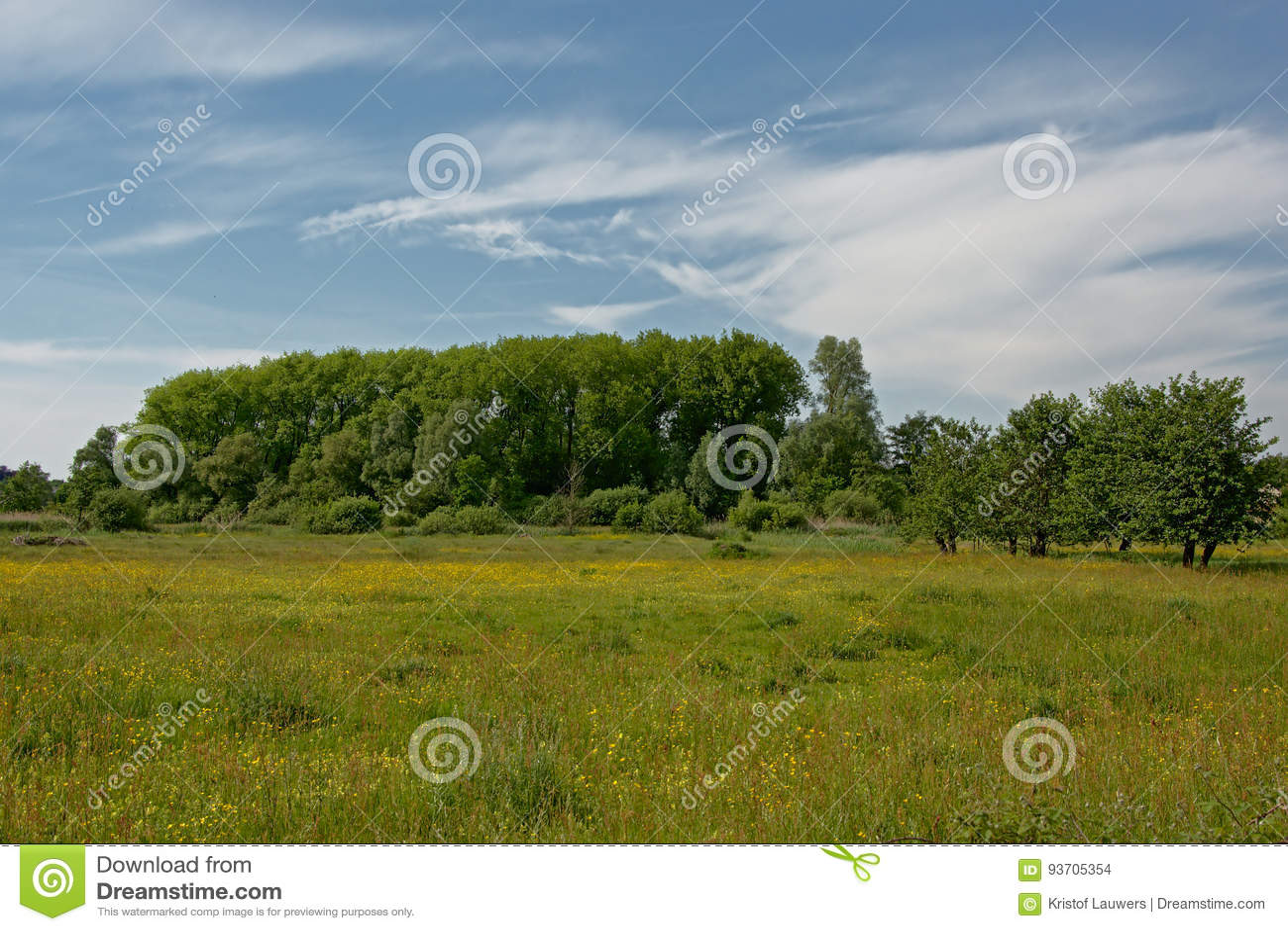 Weide met gele bloemen en groene bomen in Vlaanderen