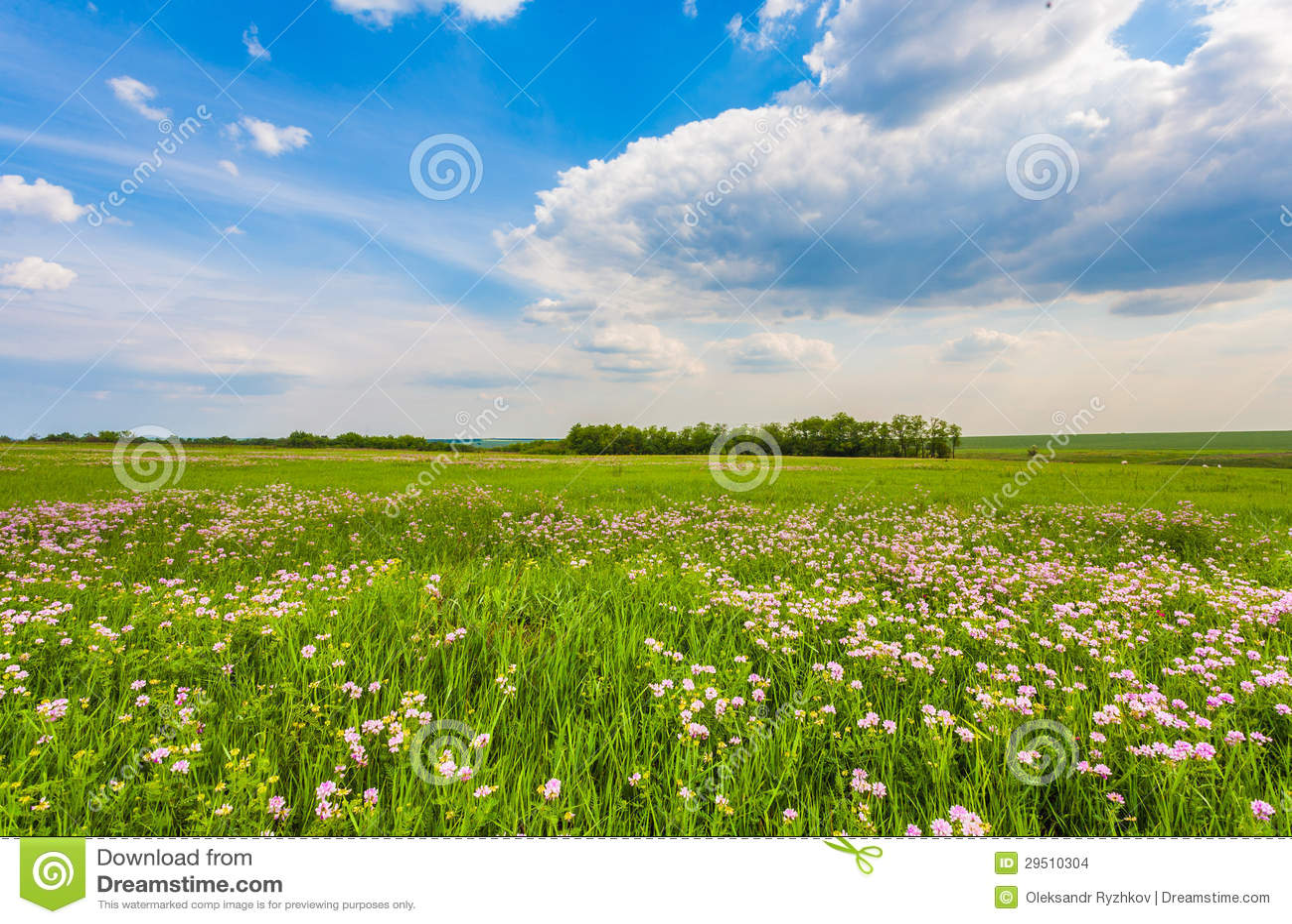 Weide met groen gras en blauwe hemel