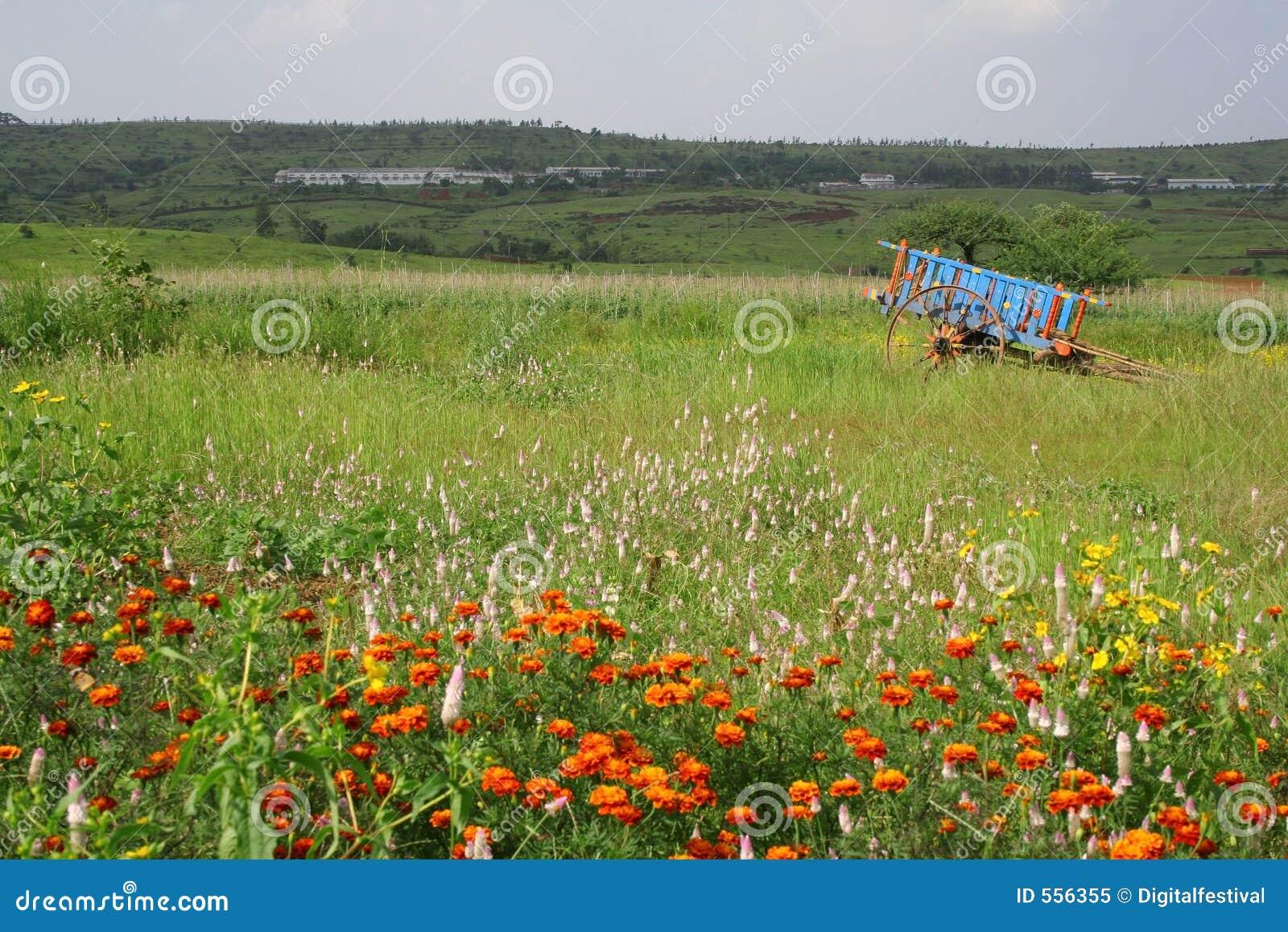 Weiden en bloemen in toneel landelijk India