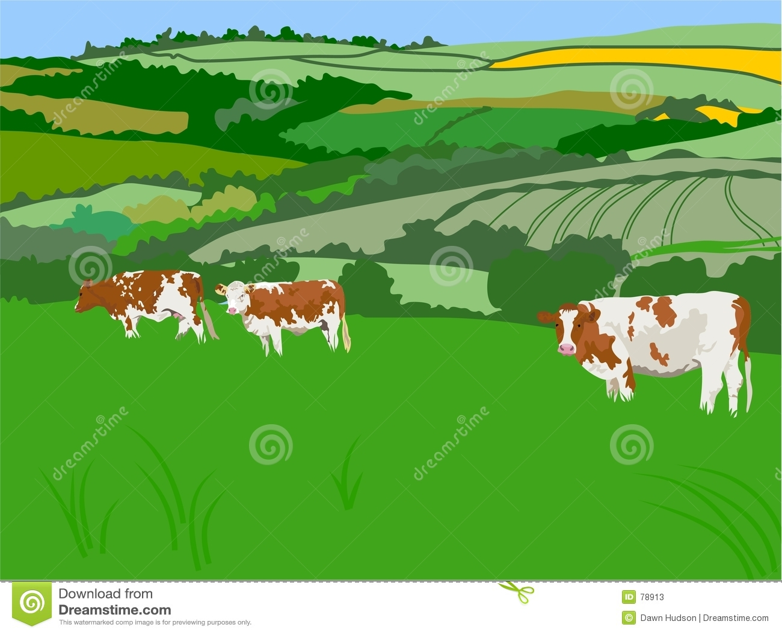 Weiden lassen der Kühe
