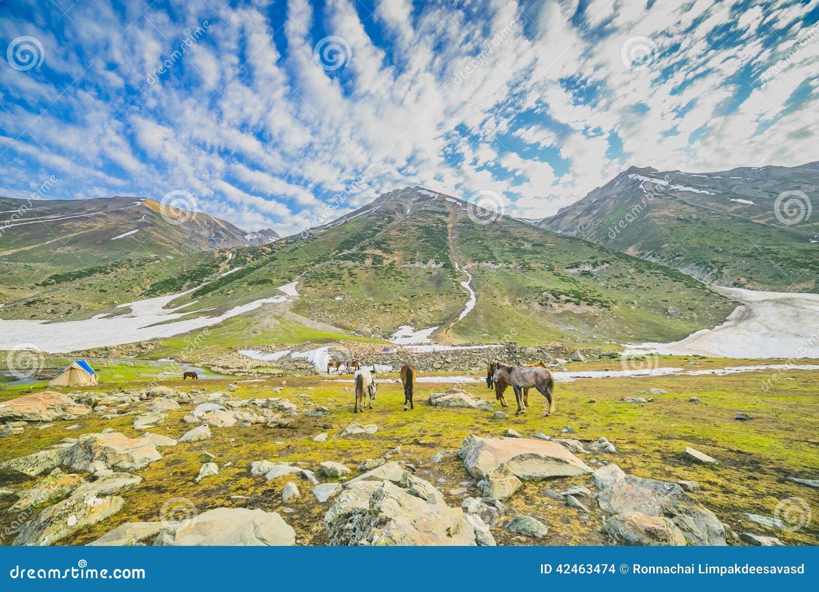 Weiden lassen von Pferden in den Bergen