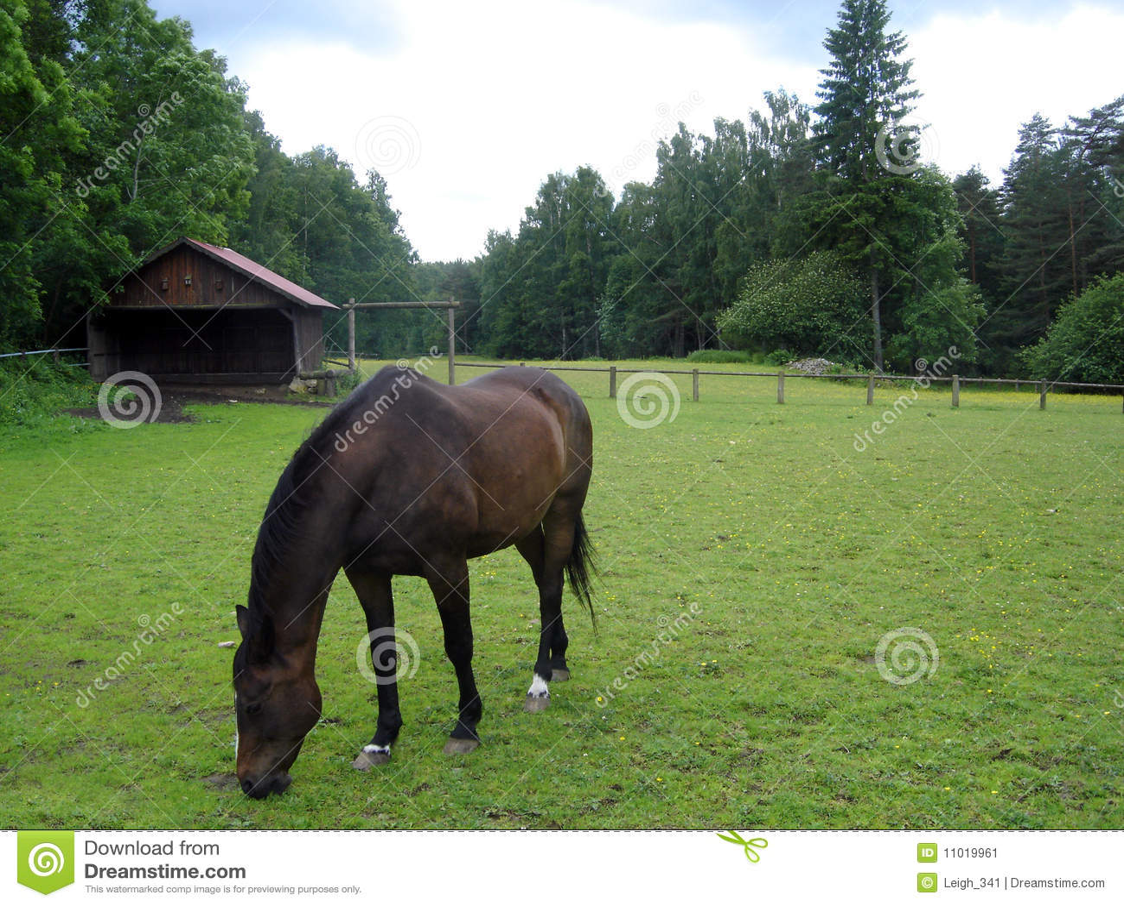 Weiden lassendes Pferd