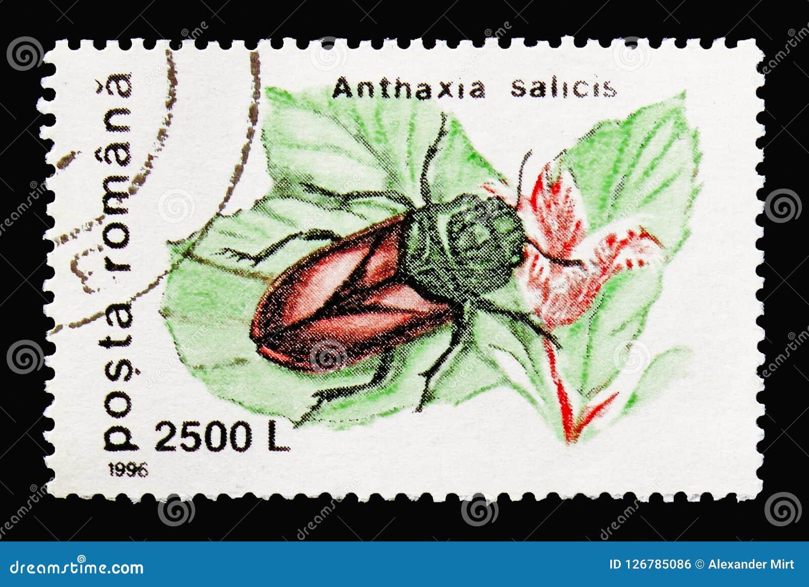 Weiden Sie Pracht-Käfer Anthaxia-salicis, Käfer serie, circ