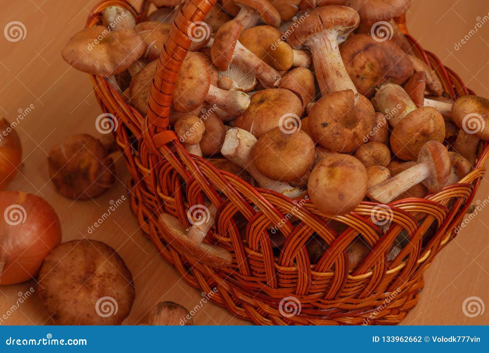 Weidenkorb angefüllt mit Pilzen
