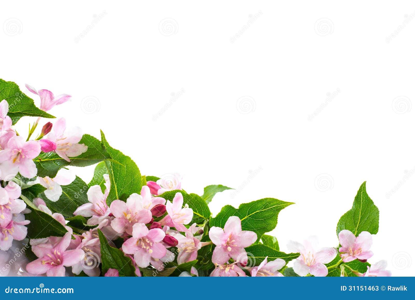 bloomed white roses wallpaper-#32