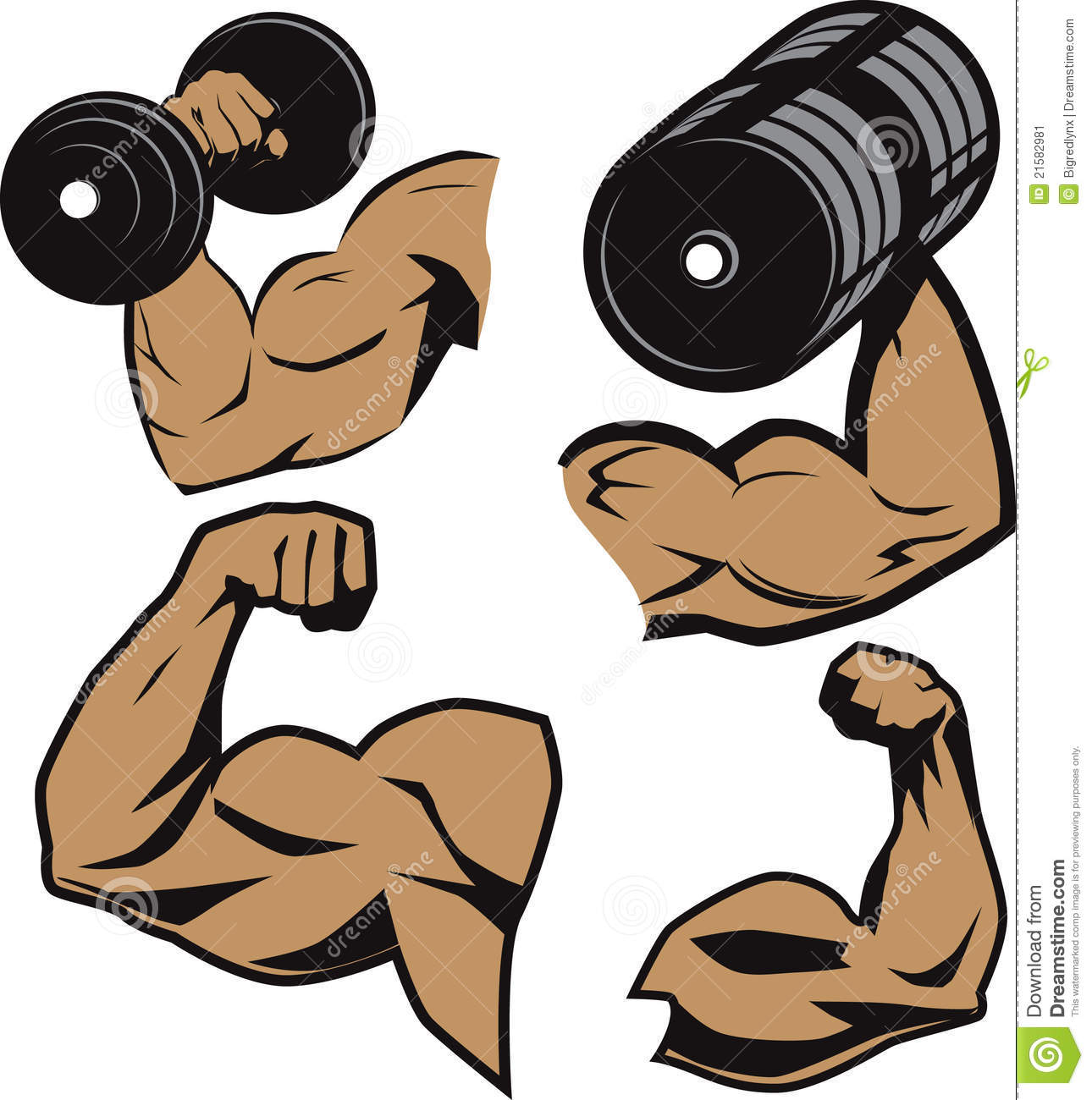 weightlifter arms stock vector illustration of curl 21582981 rh dreamstime com cartoon weightlifter clipart weightlifting clipart black and white