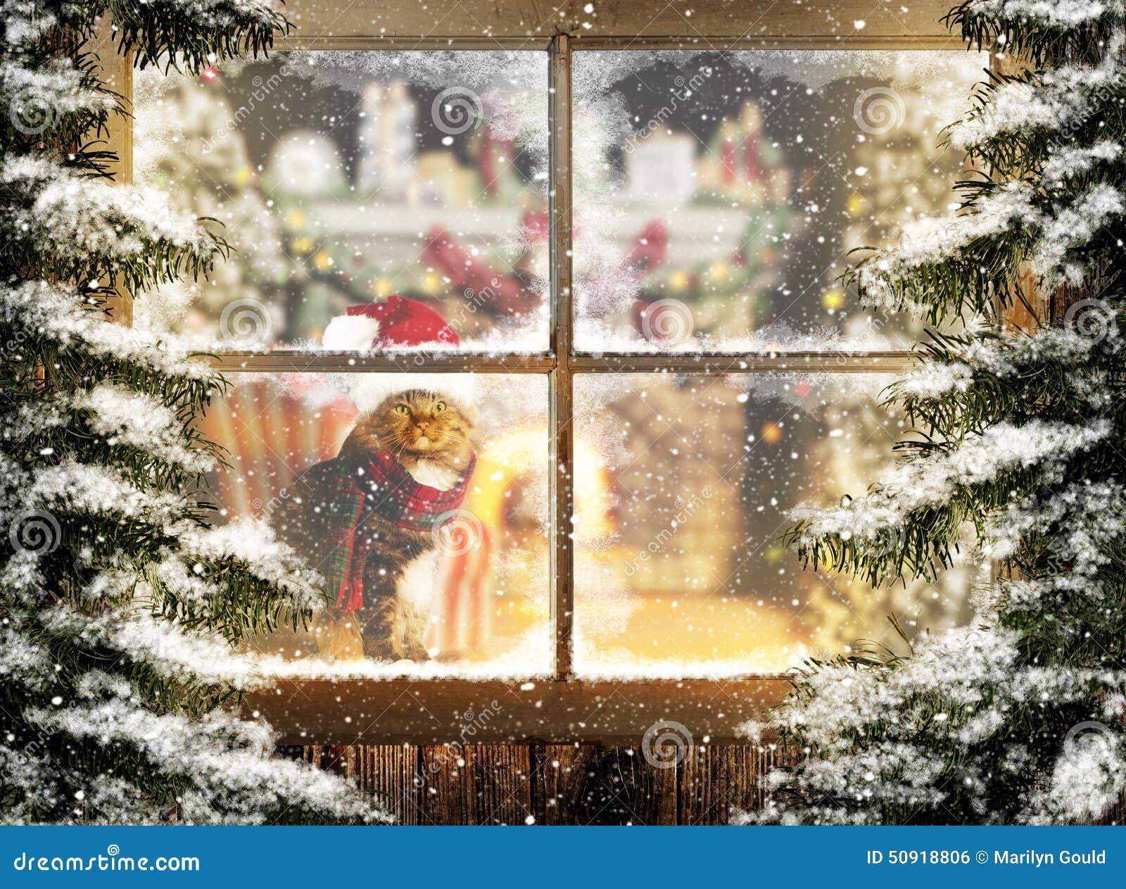 Weihnachten Cat Sitting Am Fenster Stockfoto Bild Von