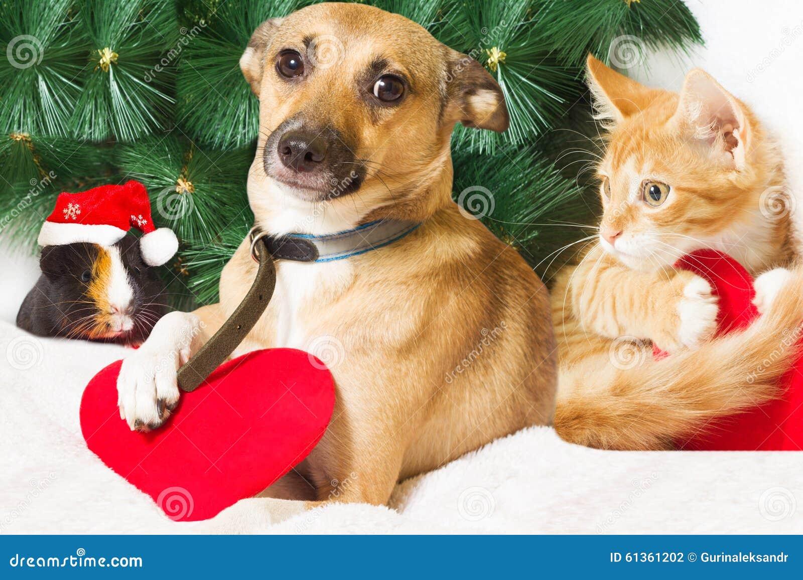 Weihnachten und Haustiere