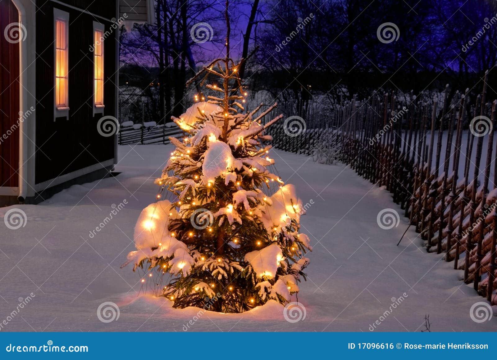 Weihnachtsbaum nachts