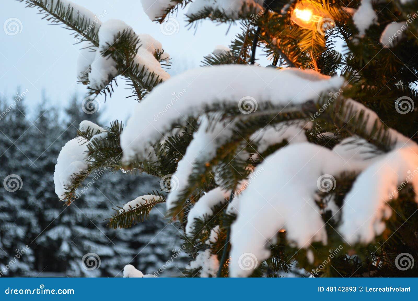 Weihnachtsbaum Und Lichter, Tannen Und Schnee Stockbild - Bild von ...