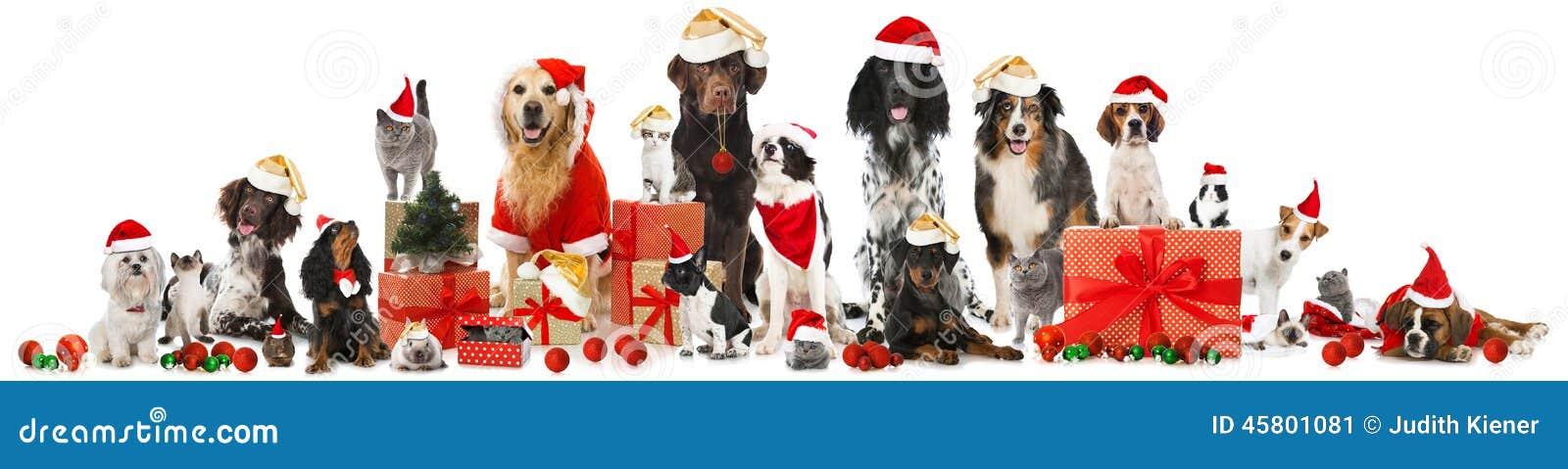 Weihnachtshaustiere
