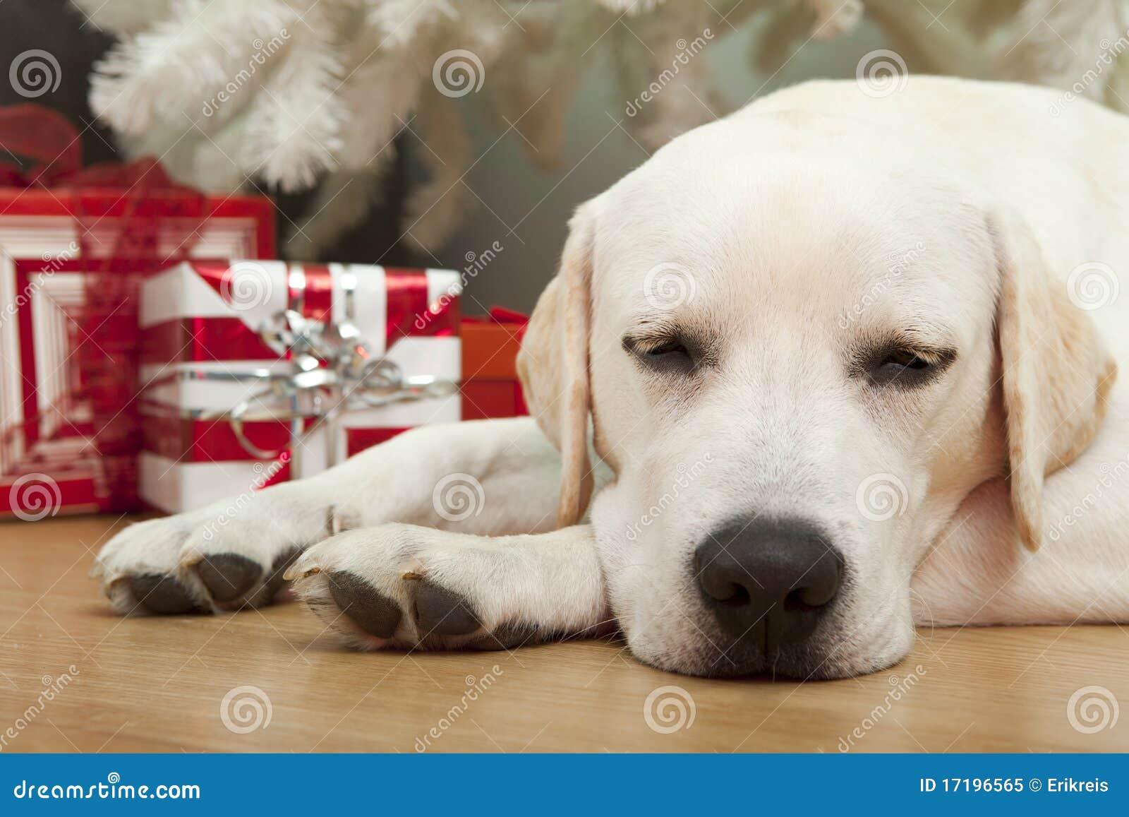Weihnachtshund stockbild. Bild von hund, kugeln, lustig - 17196565
