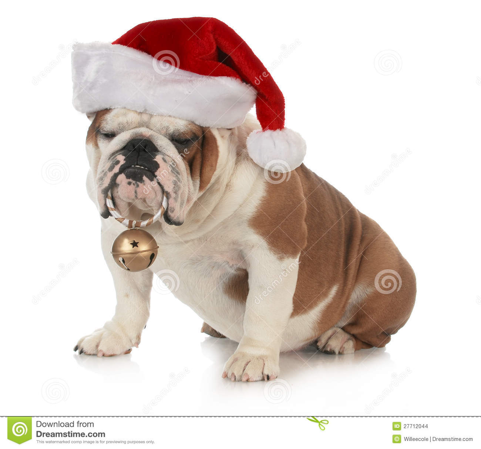 Weihnachtshund stockfoto. Bild von bulldogge, stier, kostüm - 27712044