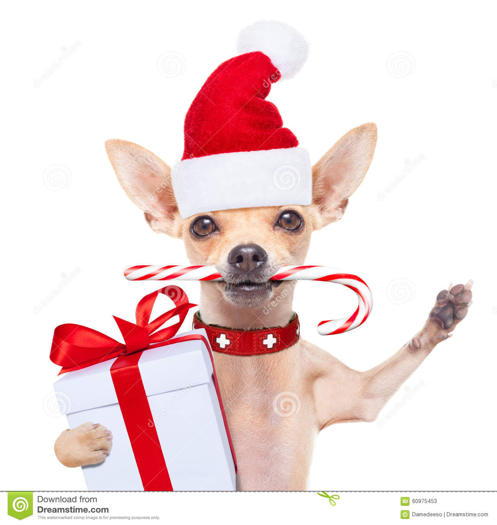 Weihnachtshund Als Weihnachtsmann Stockbild - Bild von stock ...