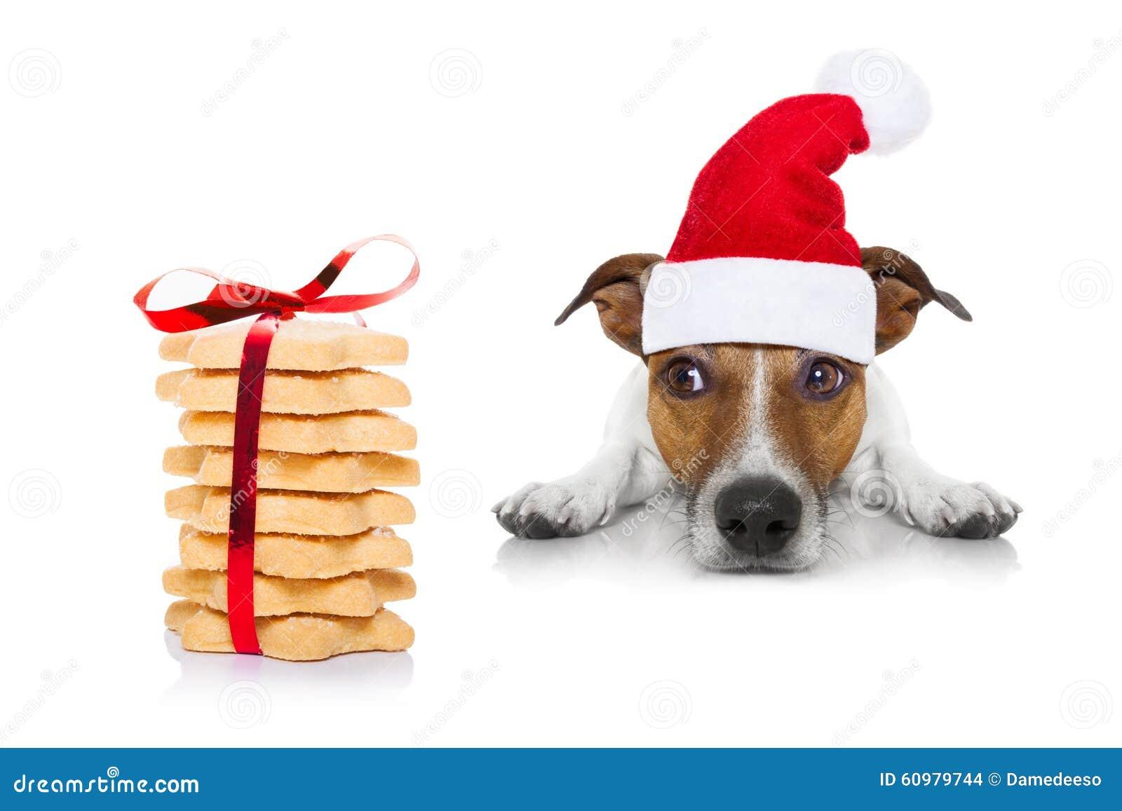 Weihnachtshund Und -plätzchen Stockfoto - Bild von aufkommen, geduld ...