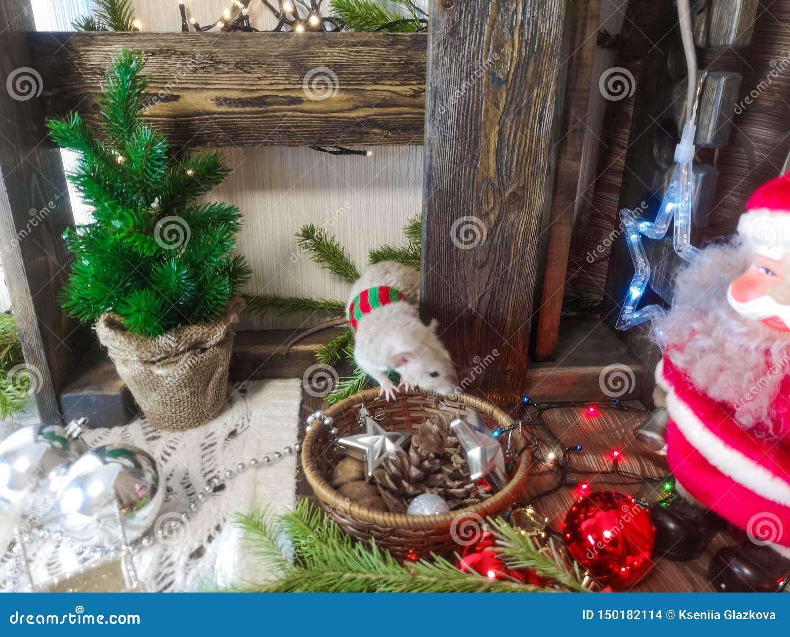 Weihnachtstiere Ratte auf dem Hintergrund von Weihnachtsdekorationen