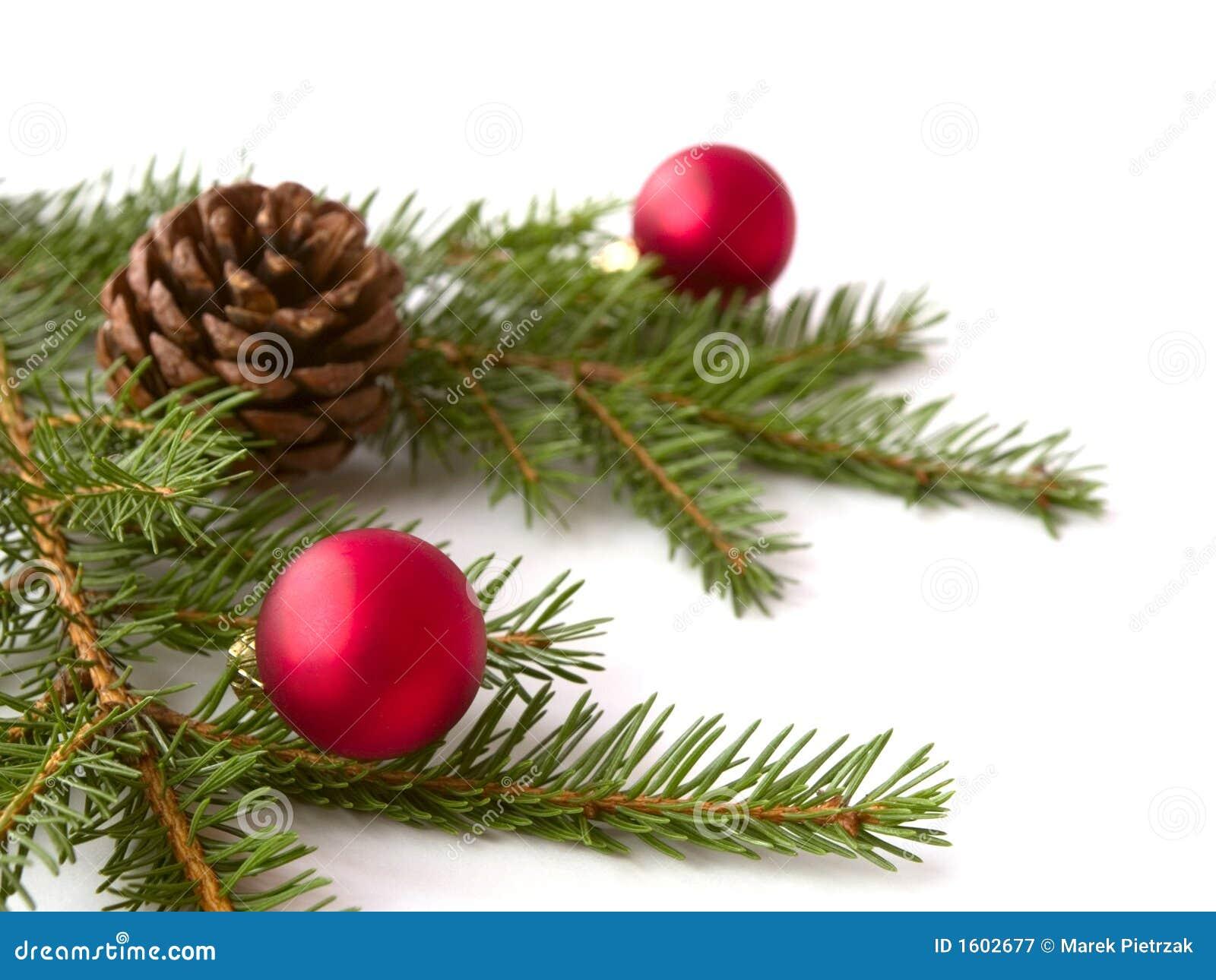 weihnachtszweige stockbild bild von getrennt wei gr n 1602677. Black Bedroom Furniture Sets. Home Design Ideas