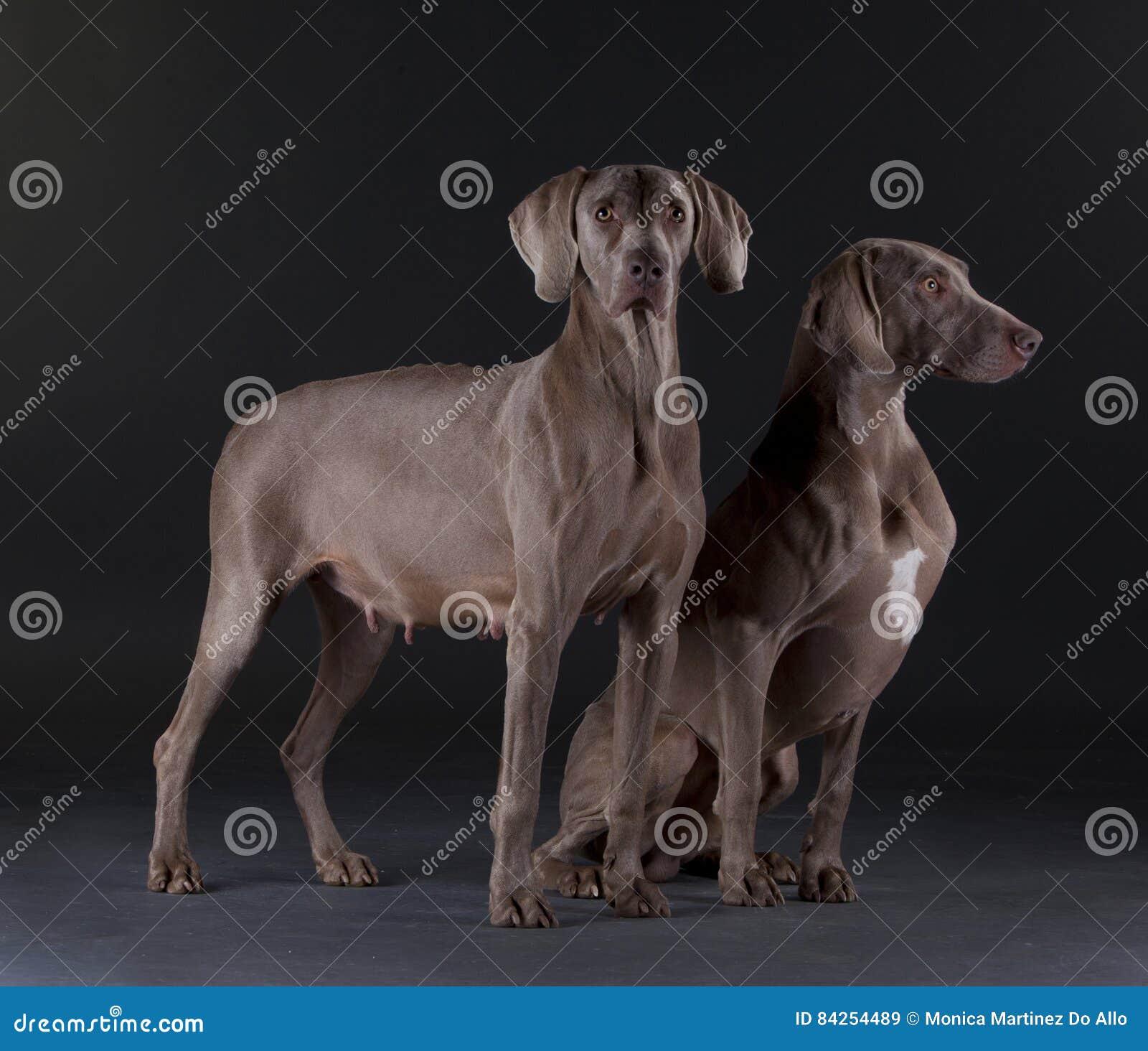 Weimar hundman och kvinnlig