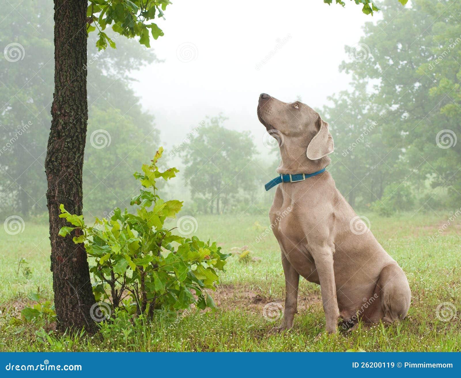 Doggy Stellungen Varianten