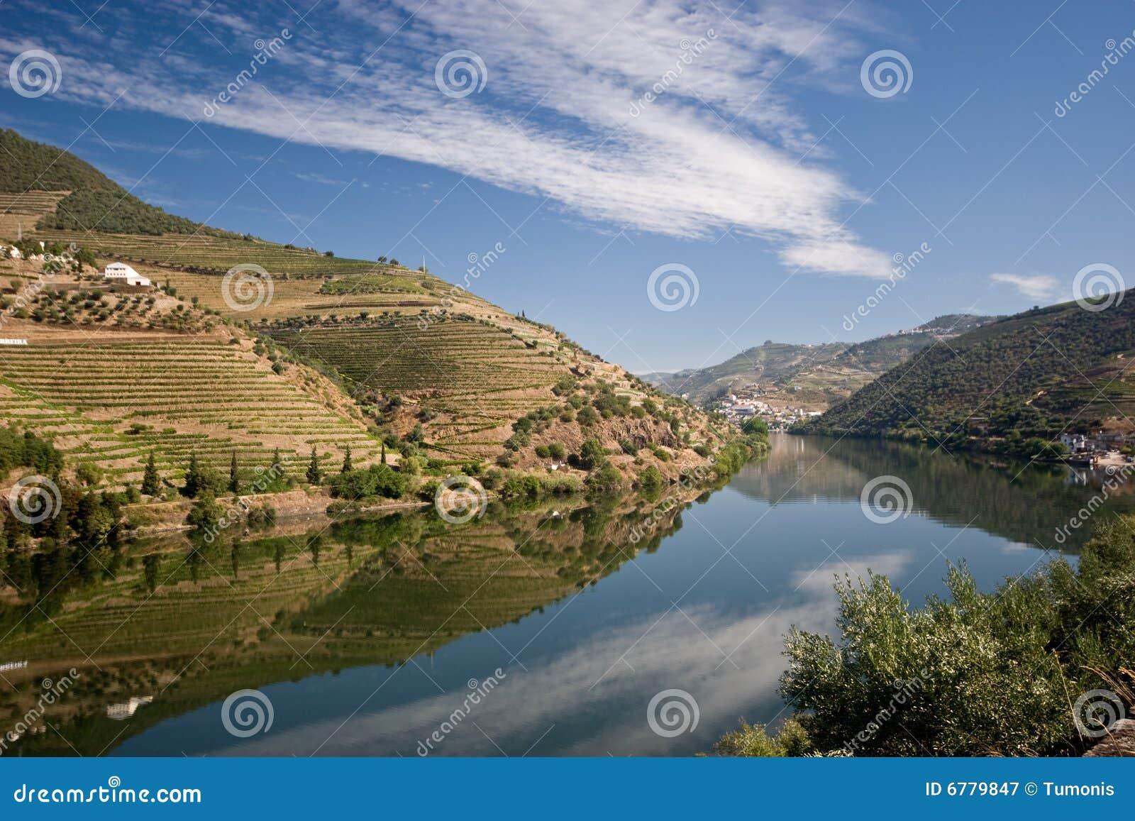 Weinberg auf Douro Fluss