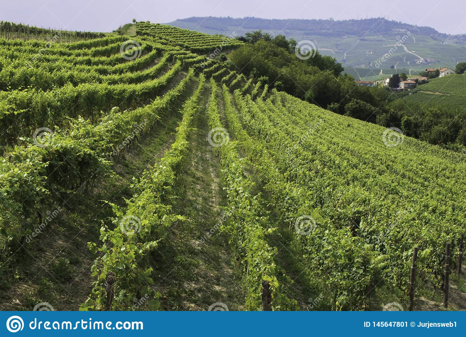 Weinberg in Barolo-Bereich Italien