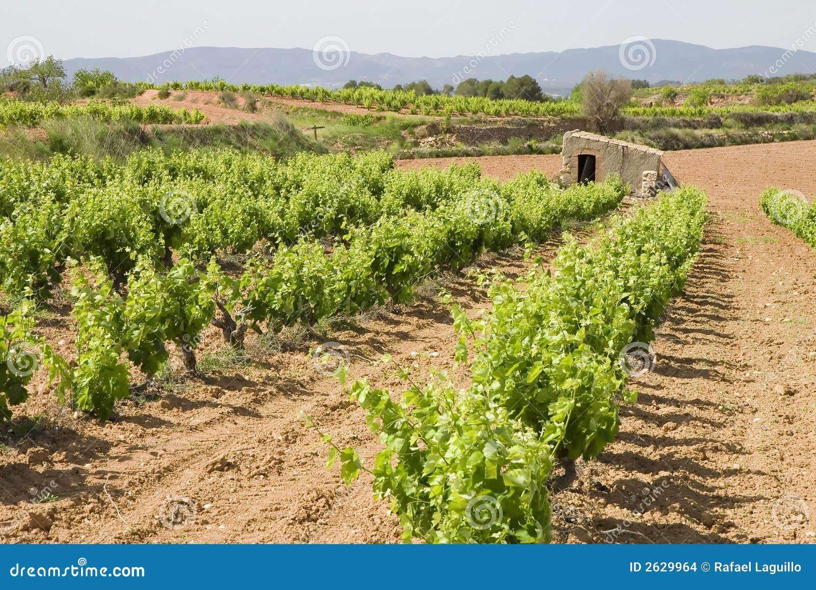 Weinberge in Katalonien