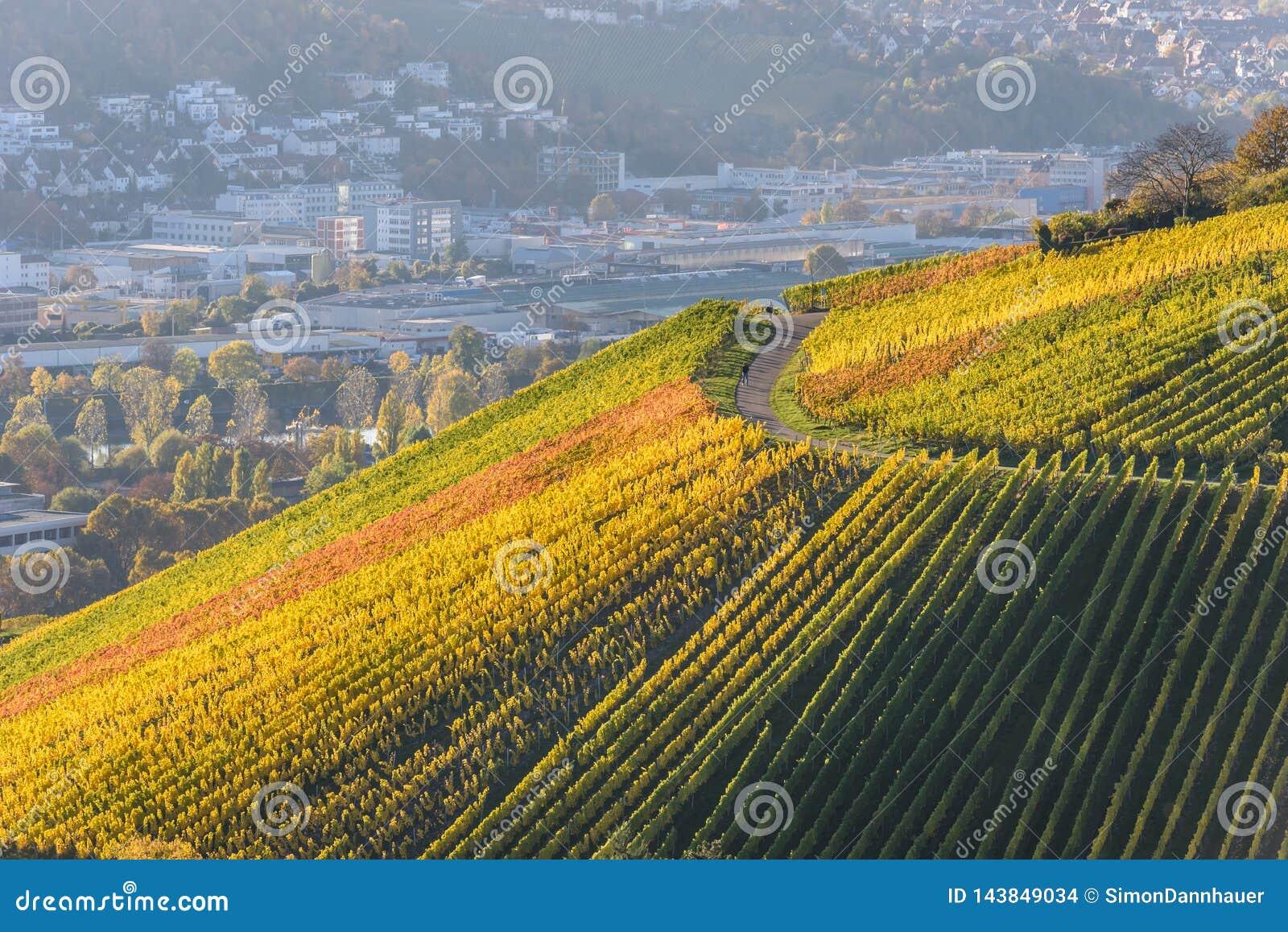 Weinberge in Stuttgart - sch?ne Weinregion im S?den von Deutschland