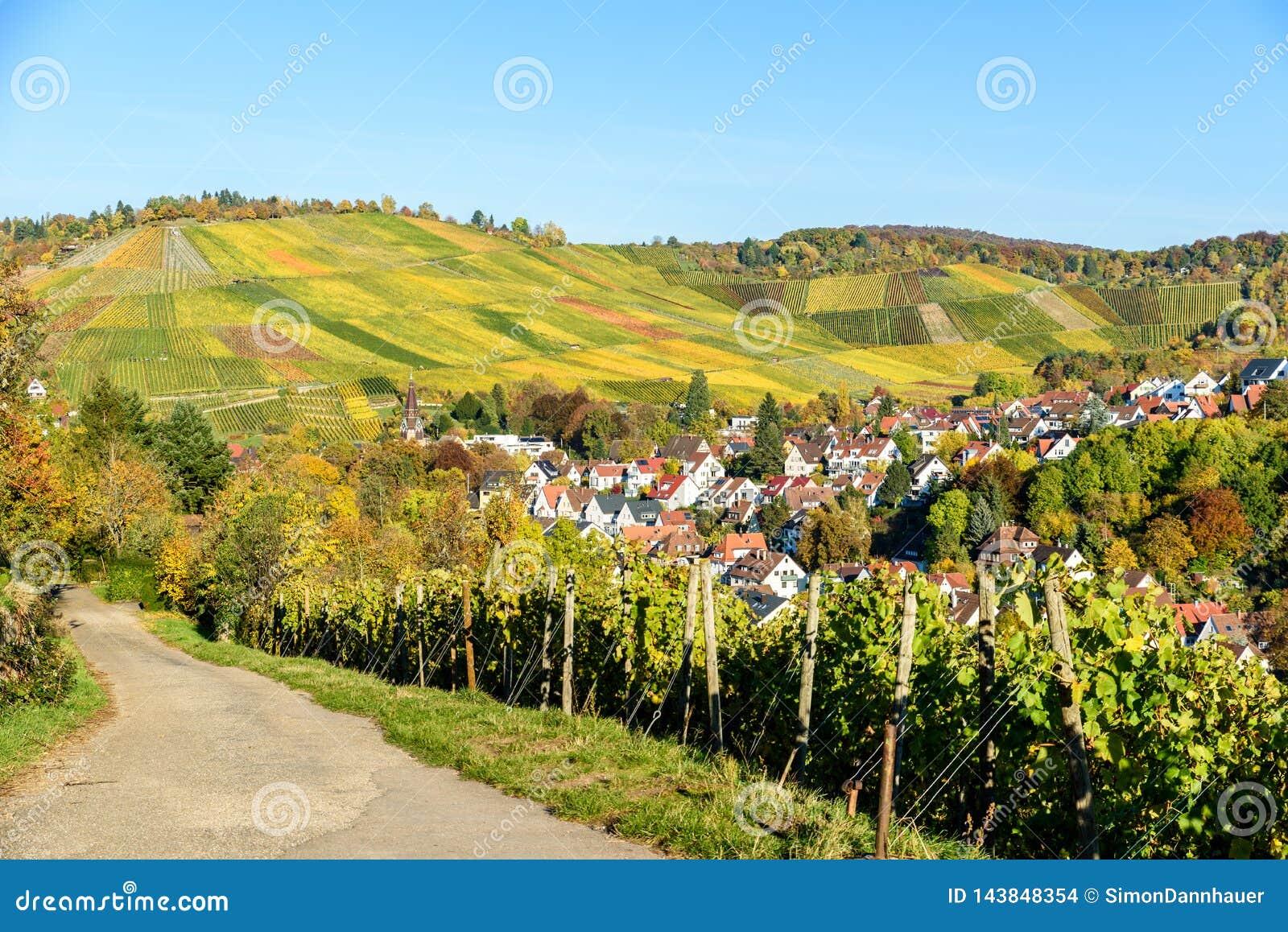 Weinberge in Stuttgart, Uhlbach am Neckar-Tal - sch?ne Landschaft im autum in Deutschland