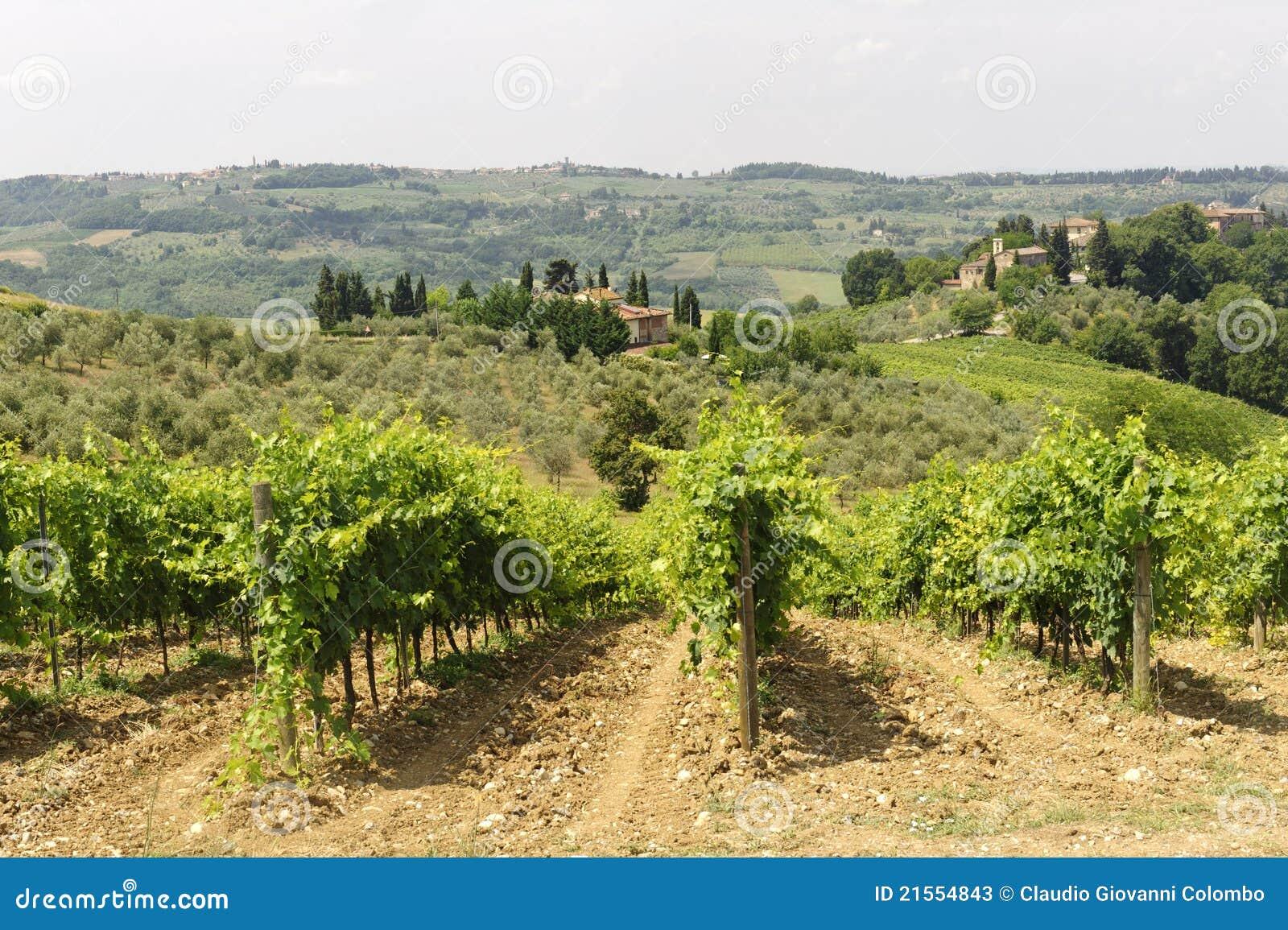 Weinberge von Chianti (Toskana)
