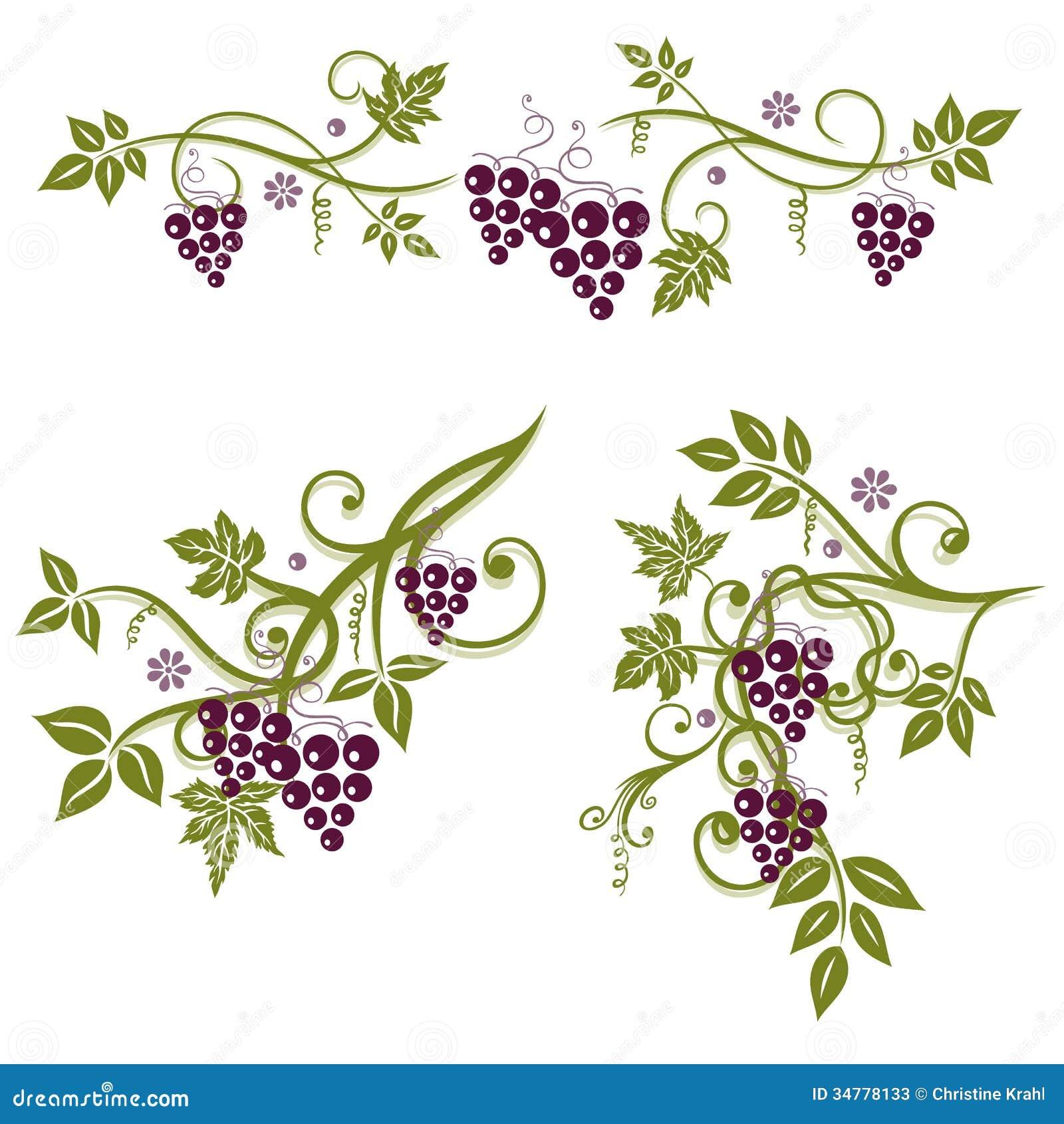 weinblätter trauben vektor abbildung illustration von