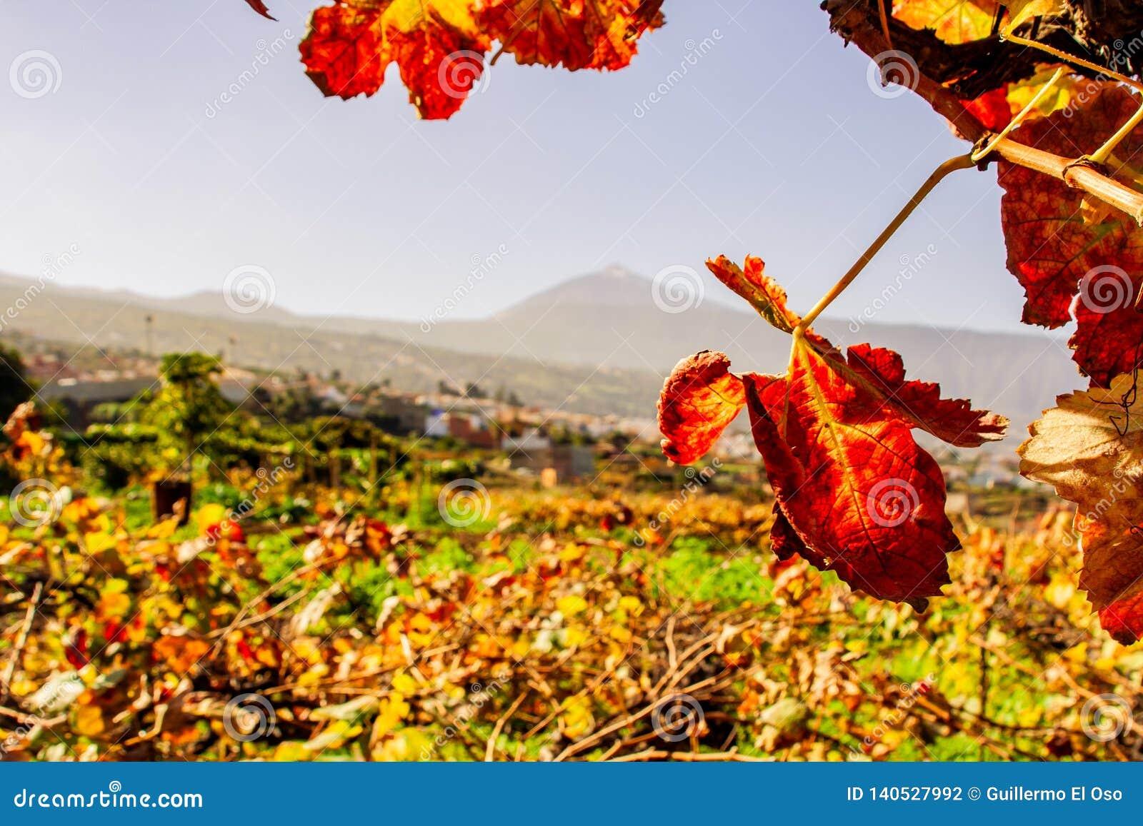 Weinblatt und ein großer Bergblick