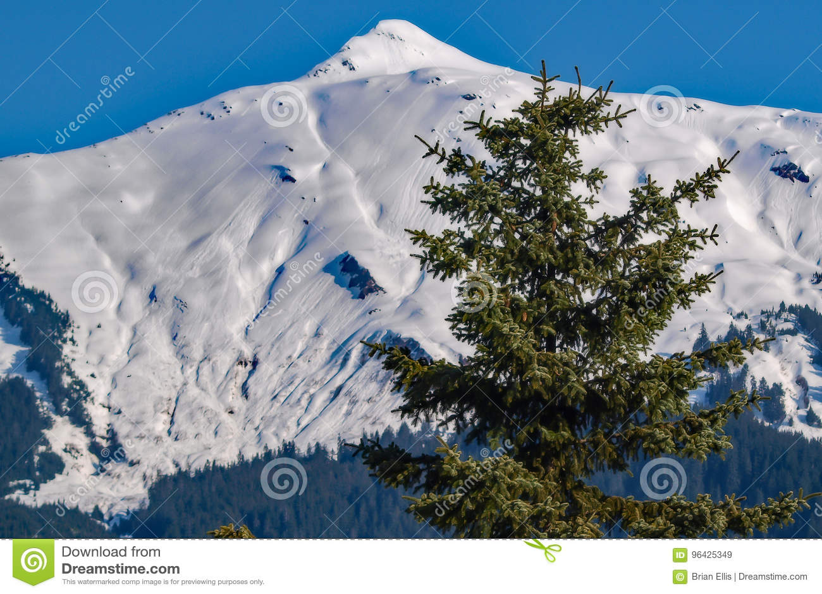 Weinig Boom, Grote Berg