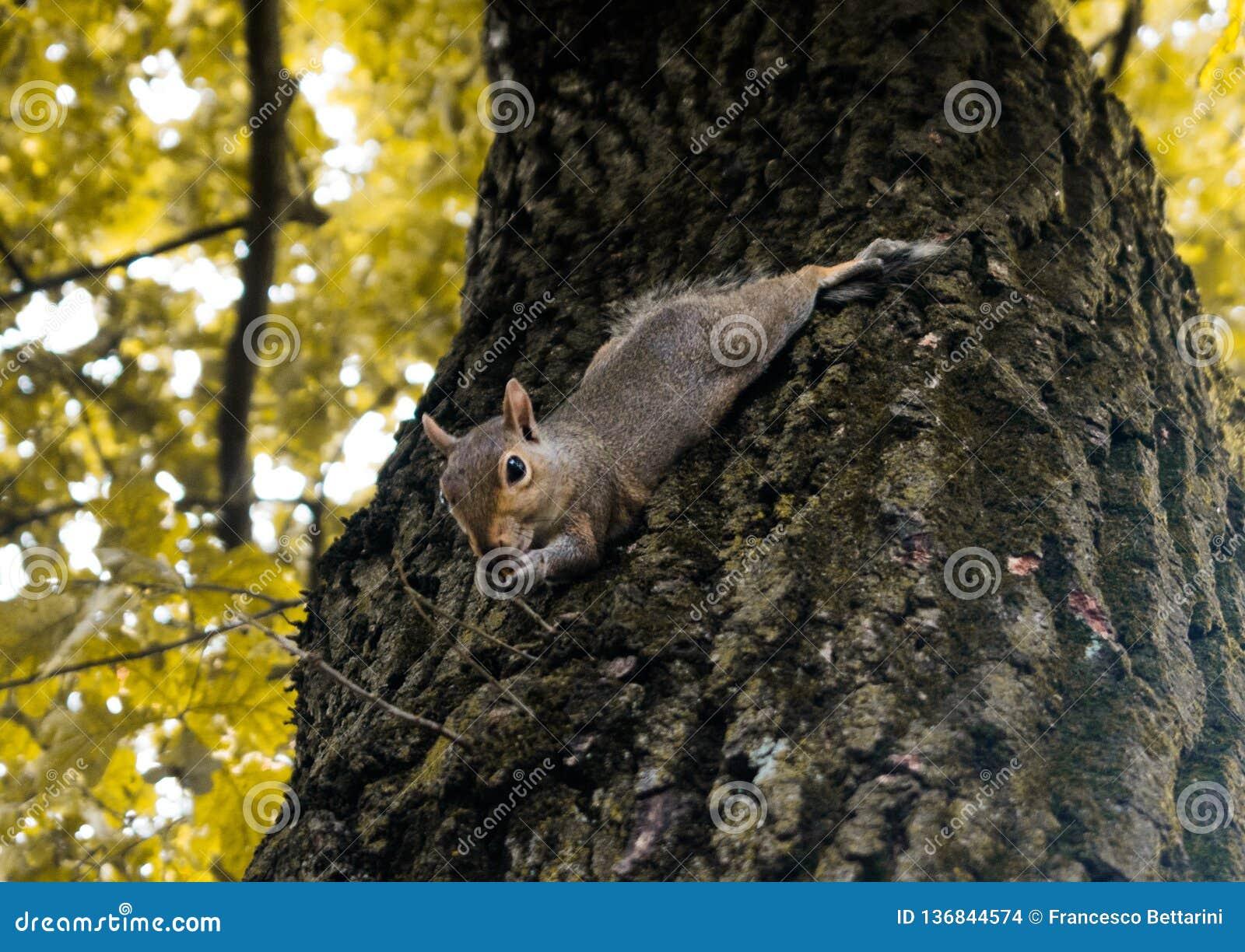 Weinig eekhoorn het spelen in het park
