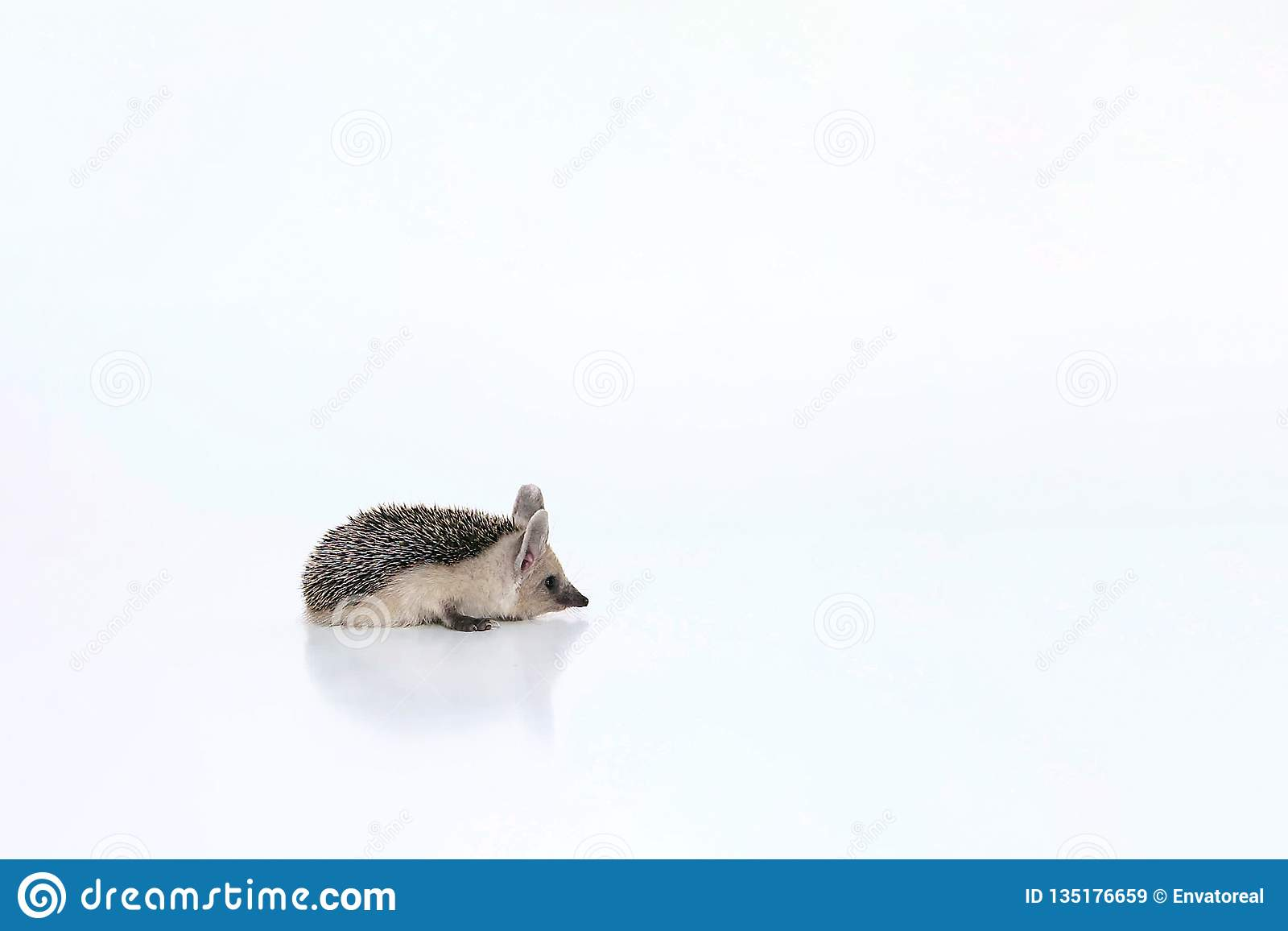 Weinig egel ligt op een witte achtergrond