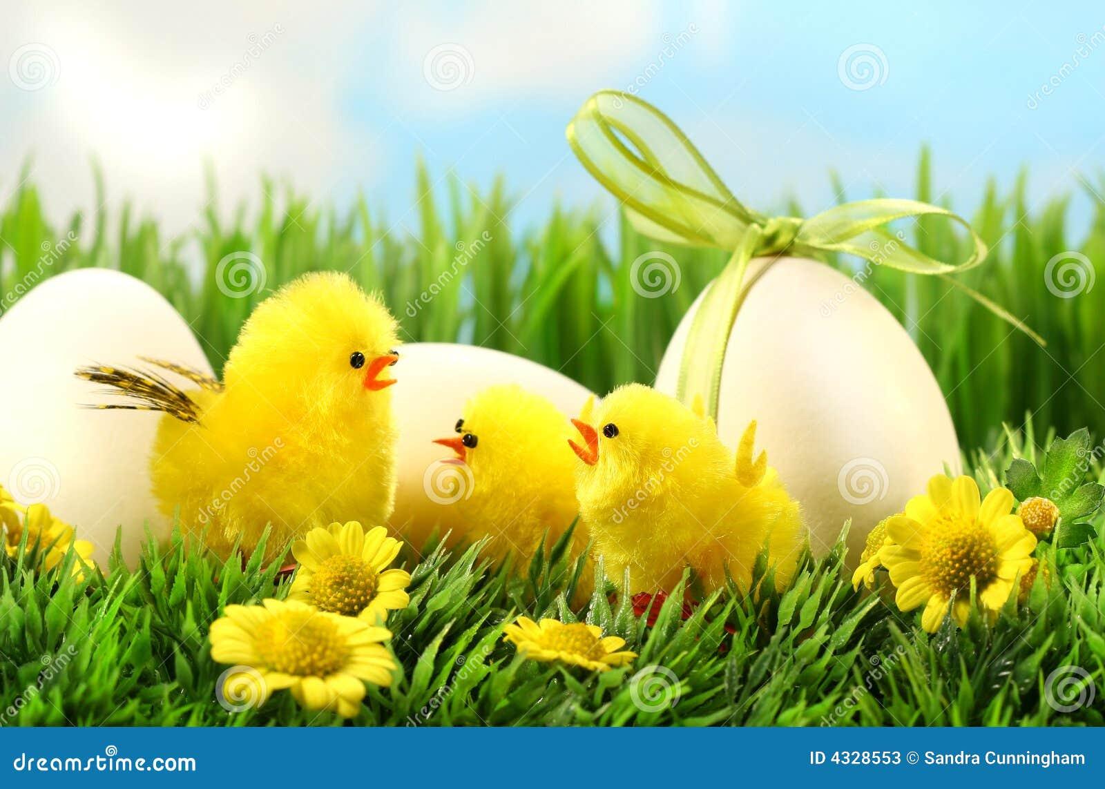 Weinig gele pasen kuikens in het lange gras stock foto 39 s afbeelding 4328553 - Decoratie geel ...