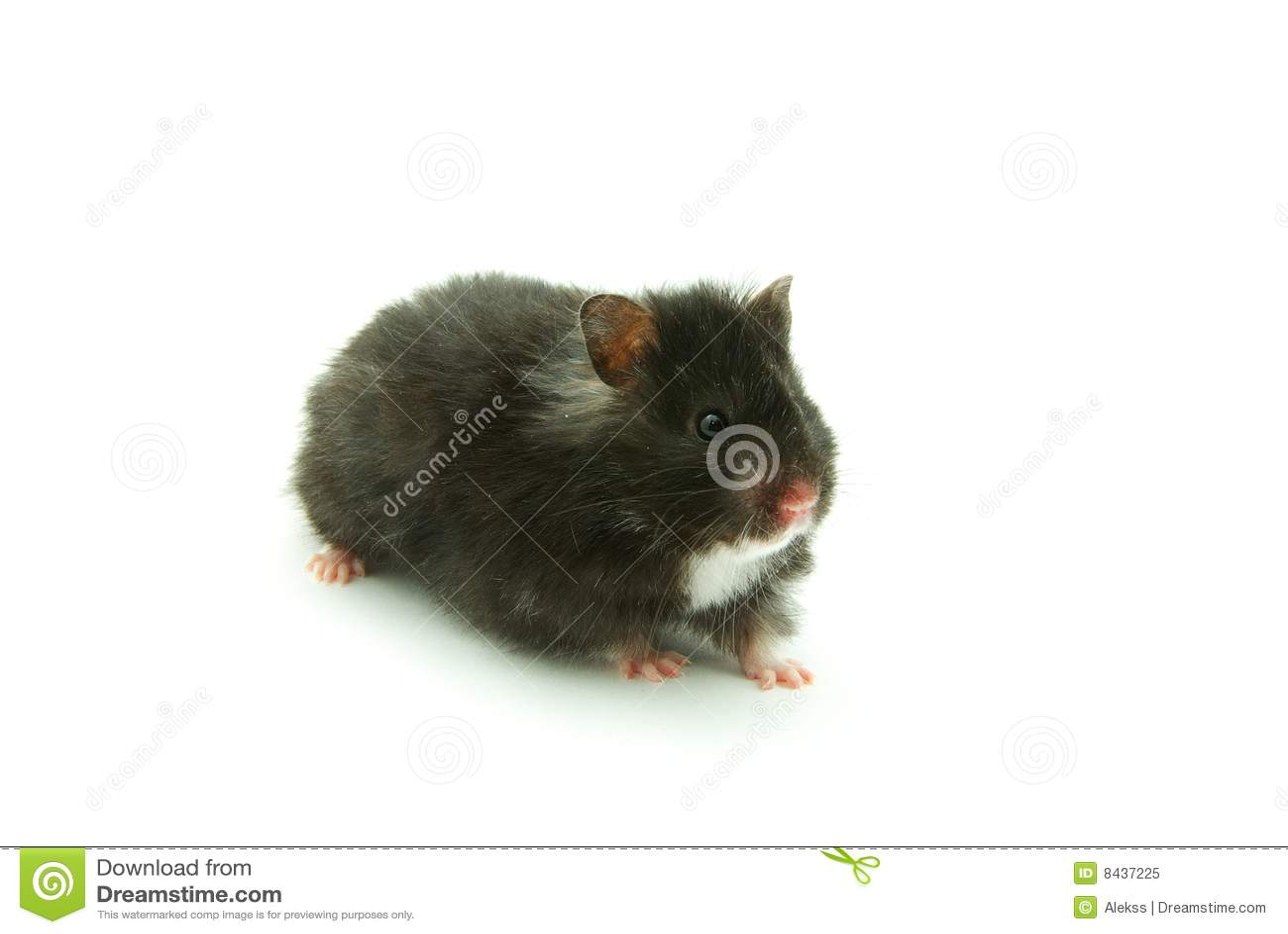 Weinig hamster