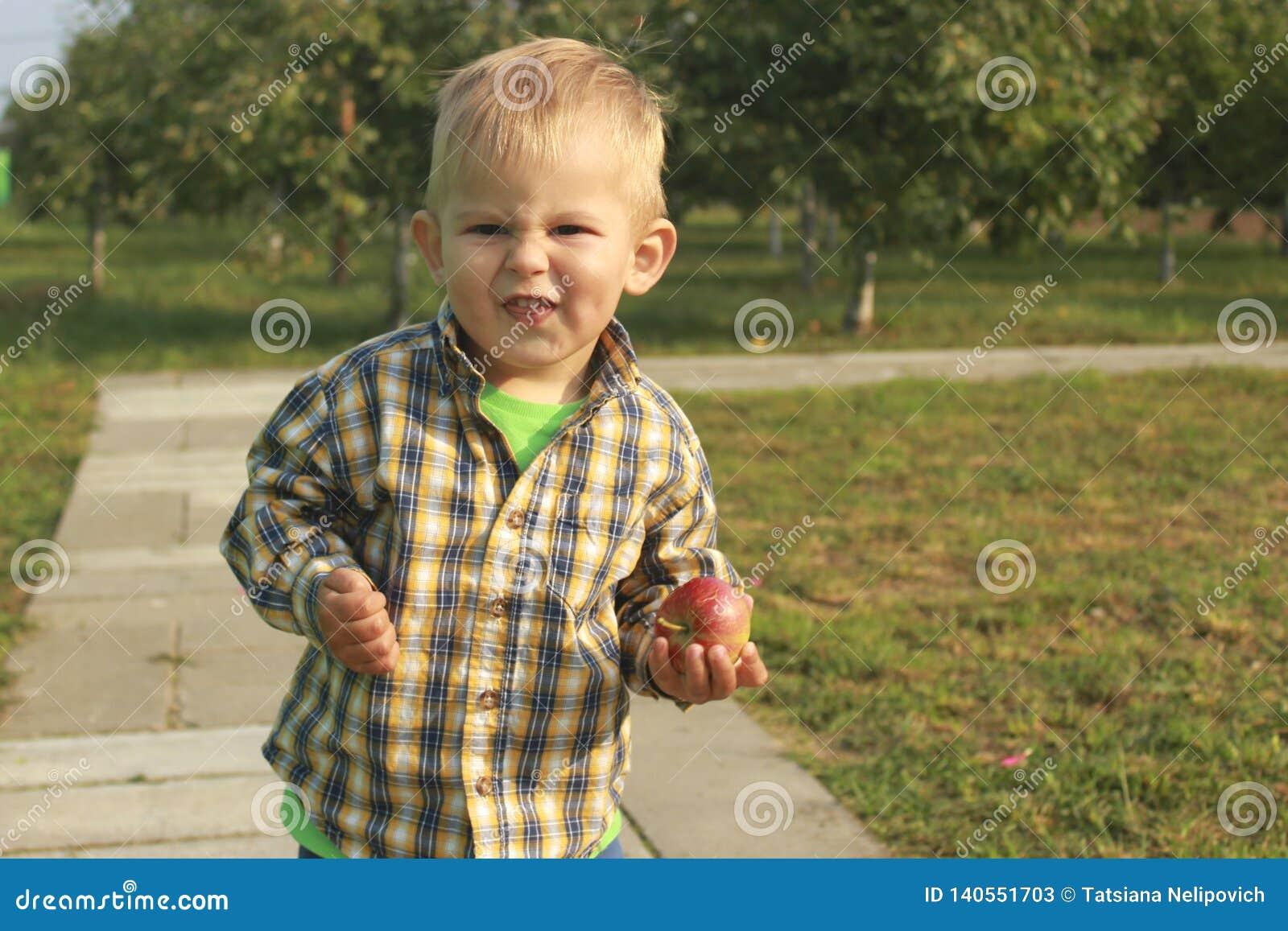 Weinig jongen die rode appelen in boomgaard eten