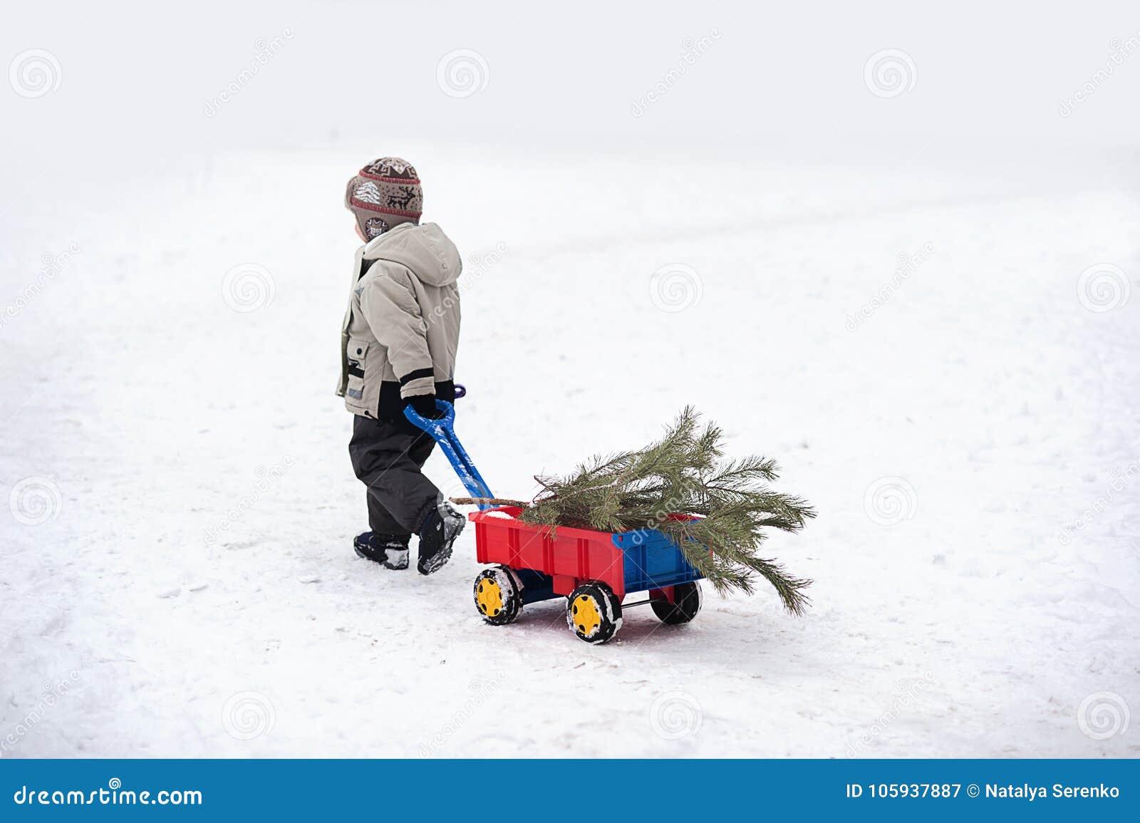 Weinig jongen draagt een Kerstboom met rode wagen Het kind kiest een Kerstboom