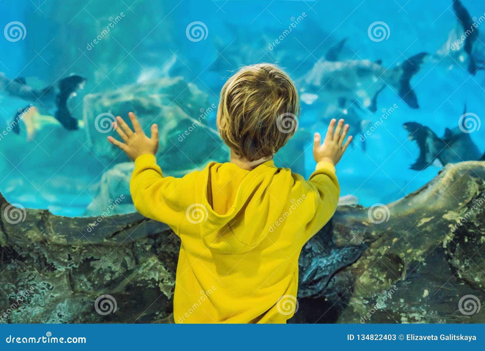 Weinig jongen, jong geitje die op de ondiepte van vissen letten die in oceanarium, kinderen zwemmen die van het onderwaterleven i