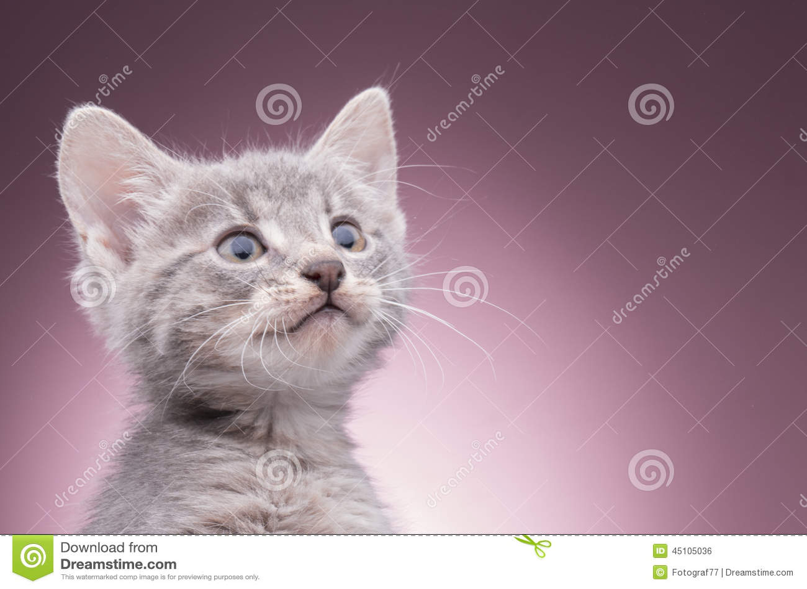 Weinig katje in de mand