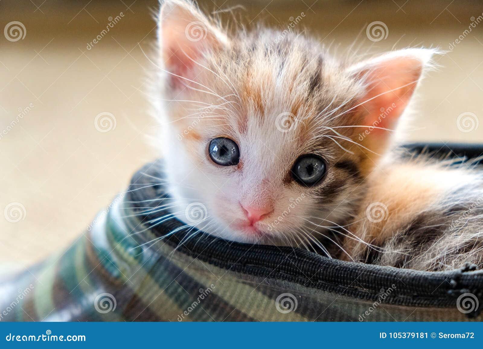 Weinig katje in de Schoen