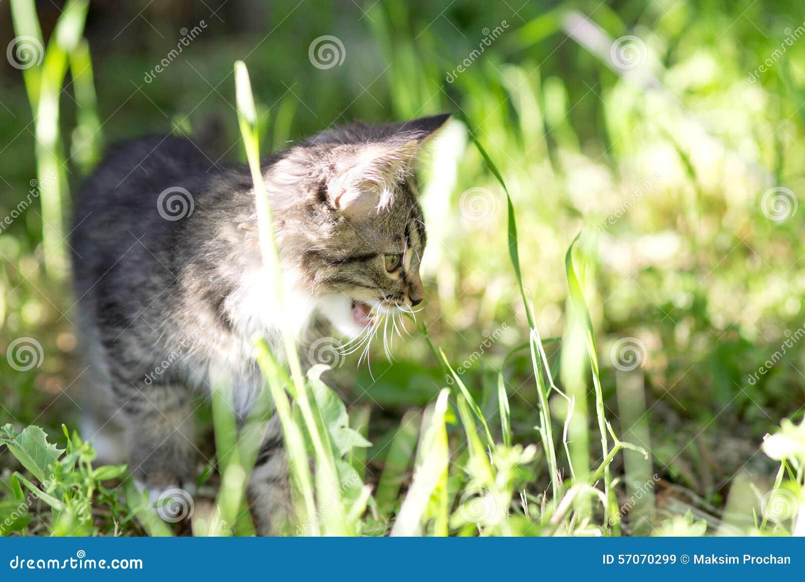 Weinig katje loopt in groen gras